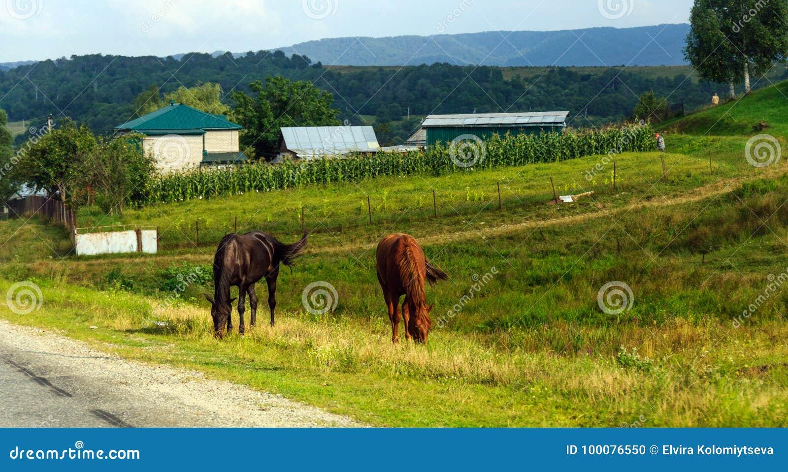 Сельская жизнь: лошади пася