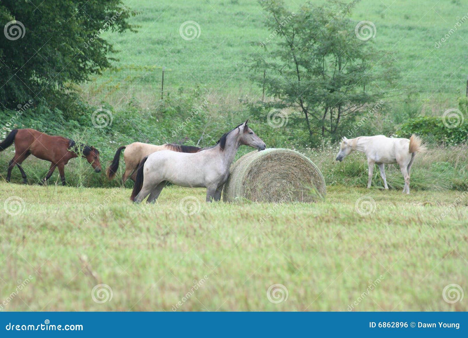 сельская местность пася лошадь
