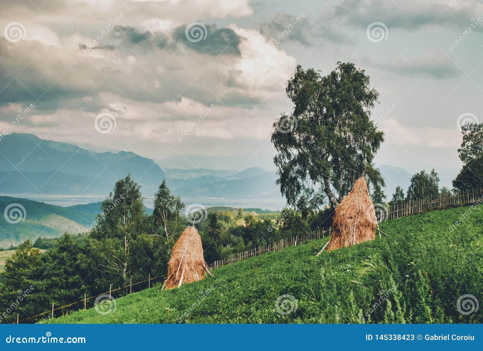 Сельский ландшафт с холмами стога сена