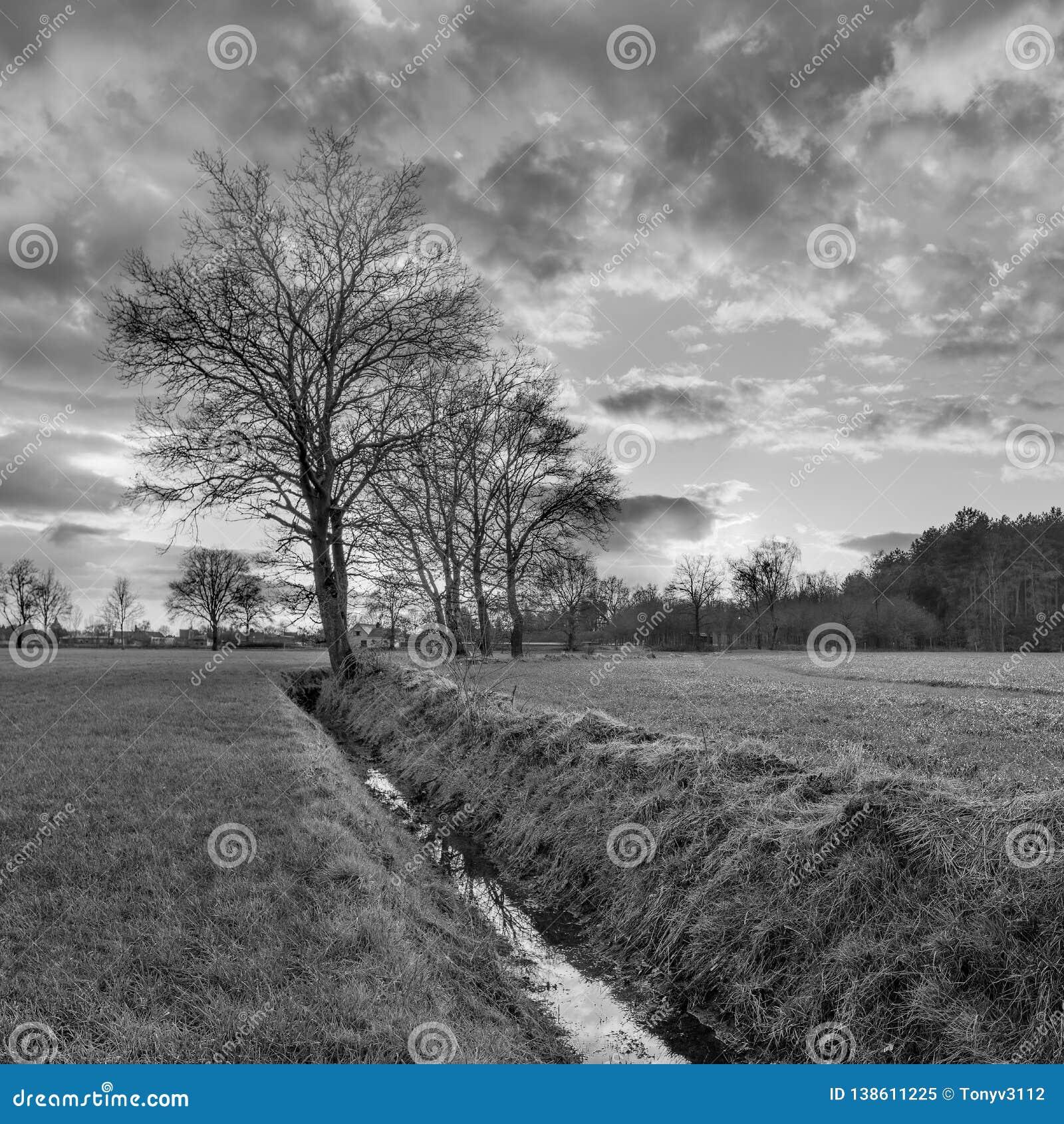 Сельский пейзаж, поле с деревьями около рва и заход солнца с драматическими облаками, Weelde, Бельгия