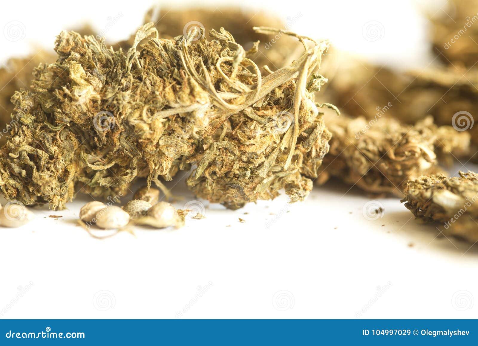 как купить в нижнем новгороде семена конопли