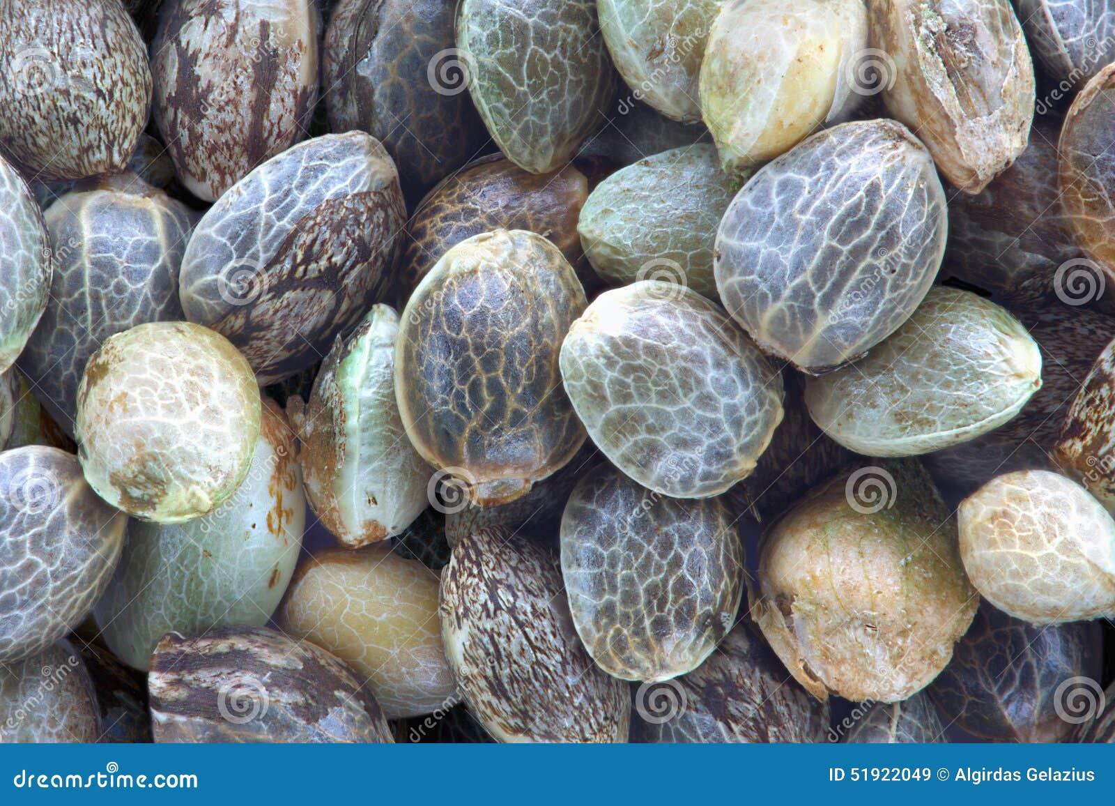 Семена пеньки