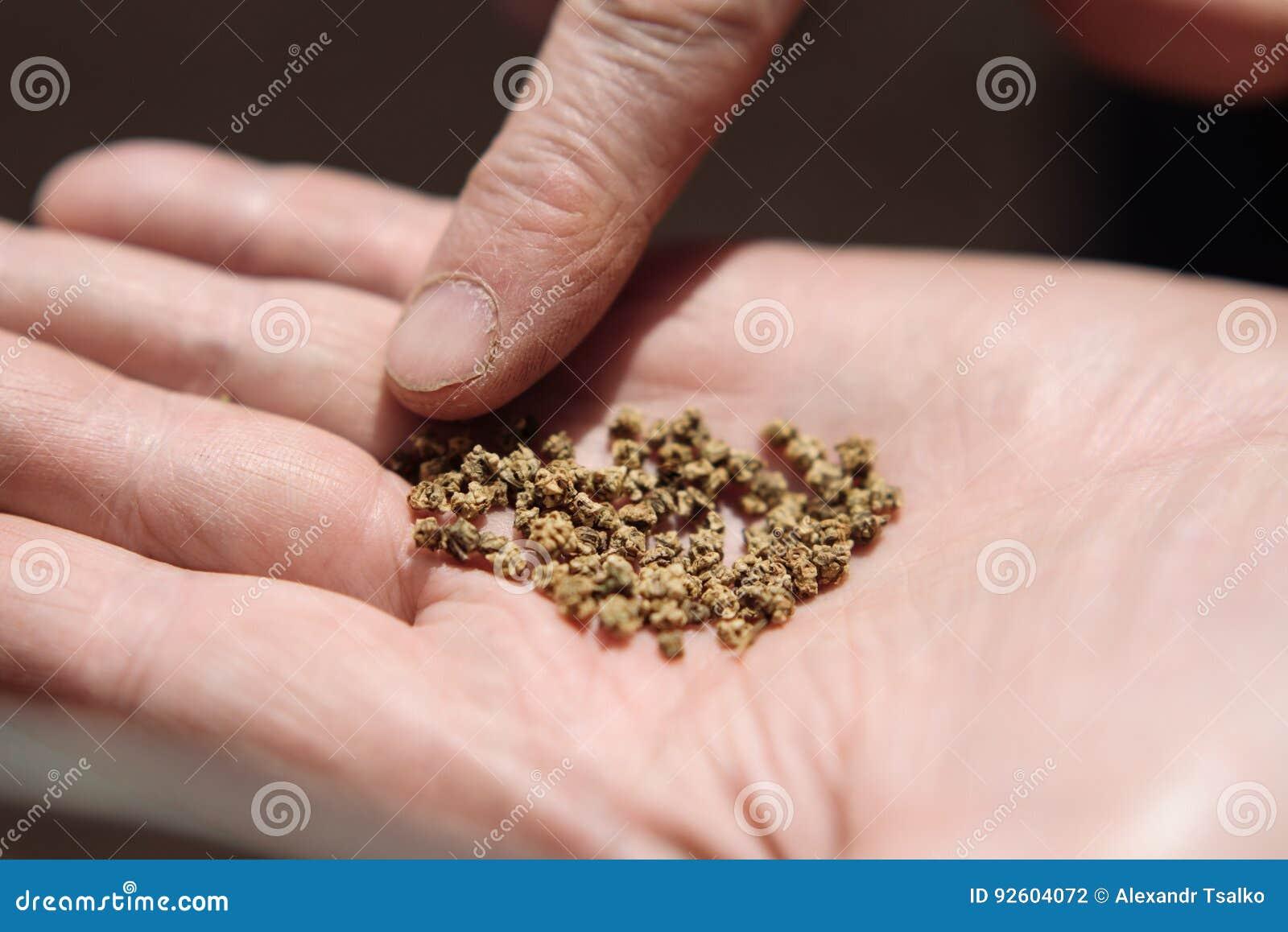 картинка семян на ладони несколько причин