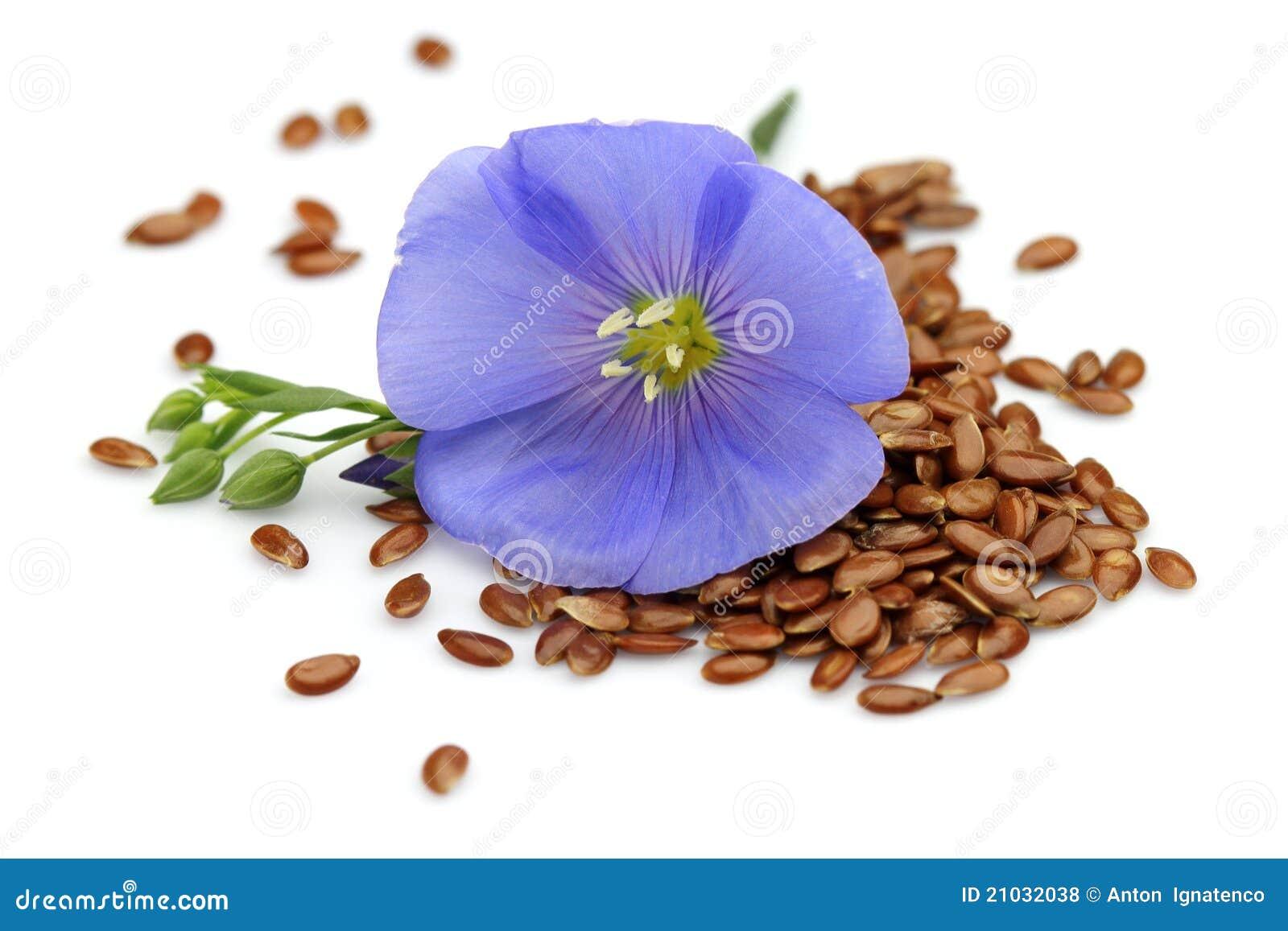 Какие семена цветов бывают