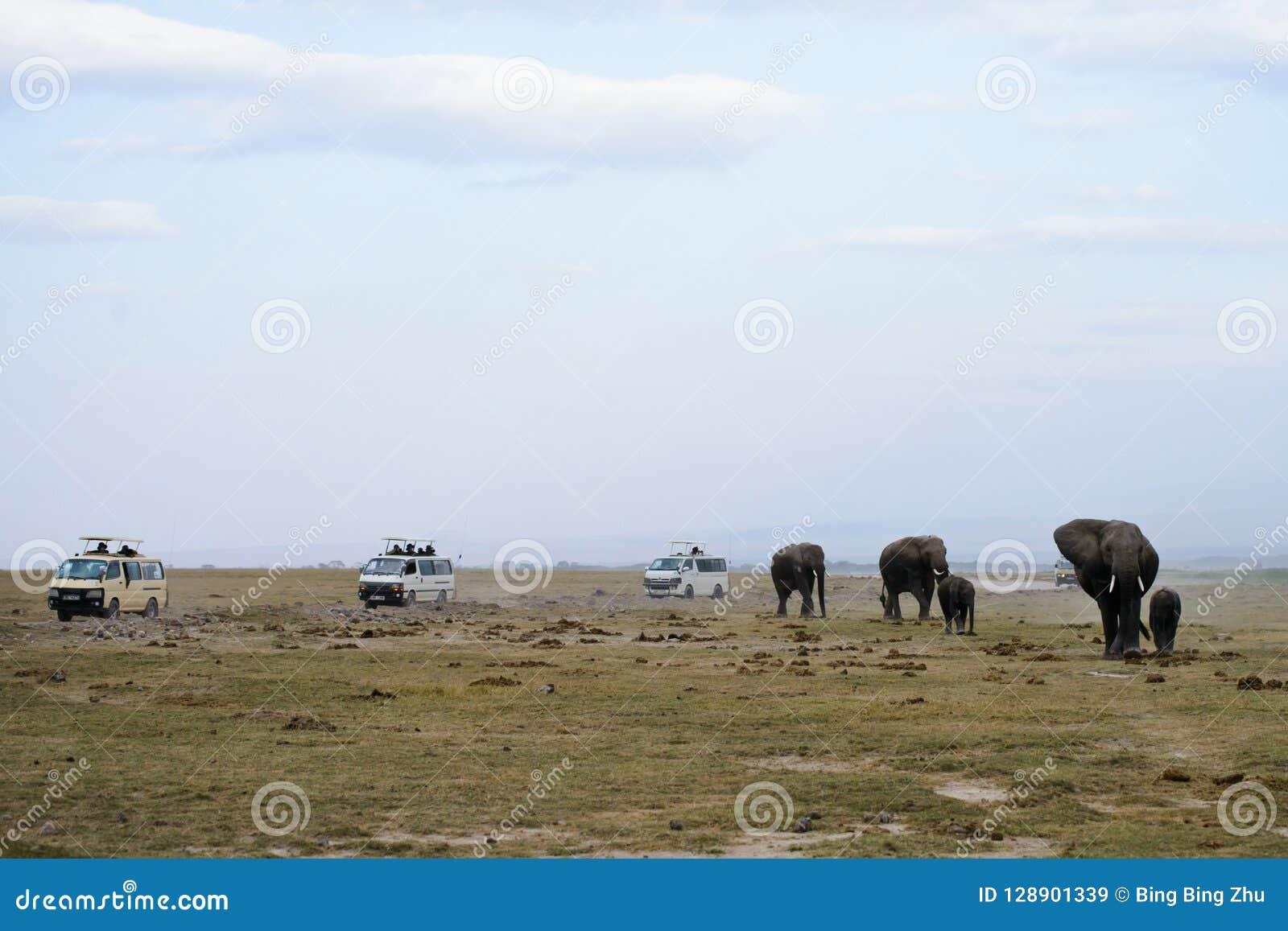 Семья слона Африки и виллисы сафари