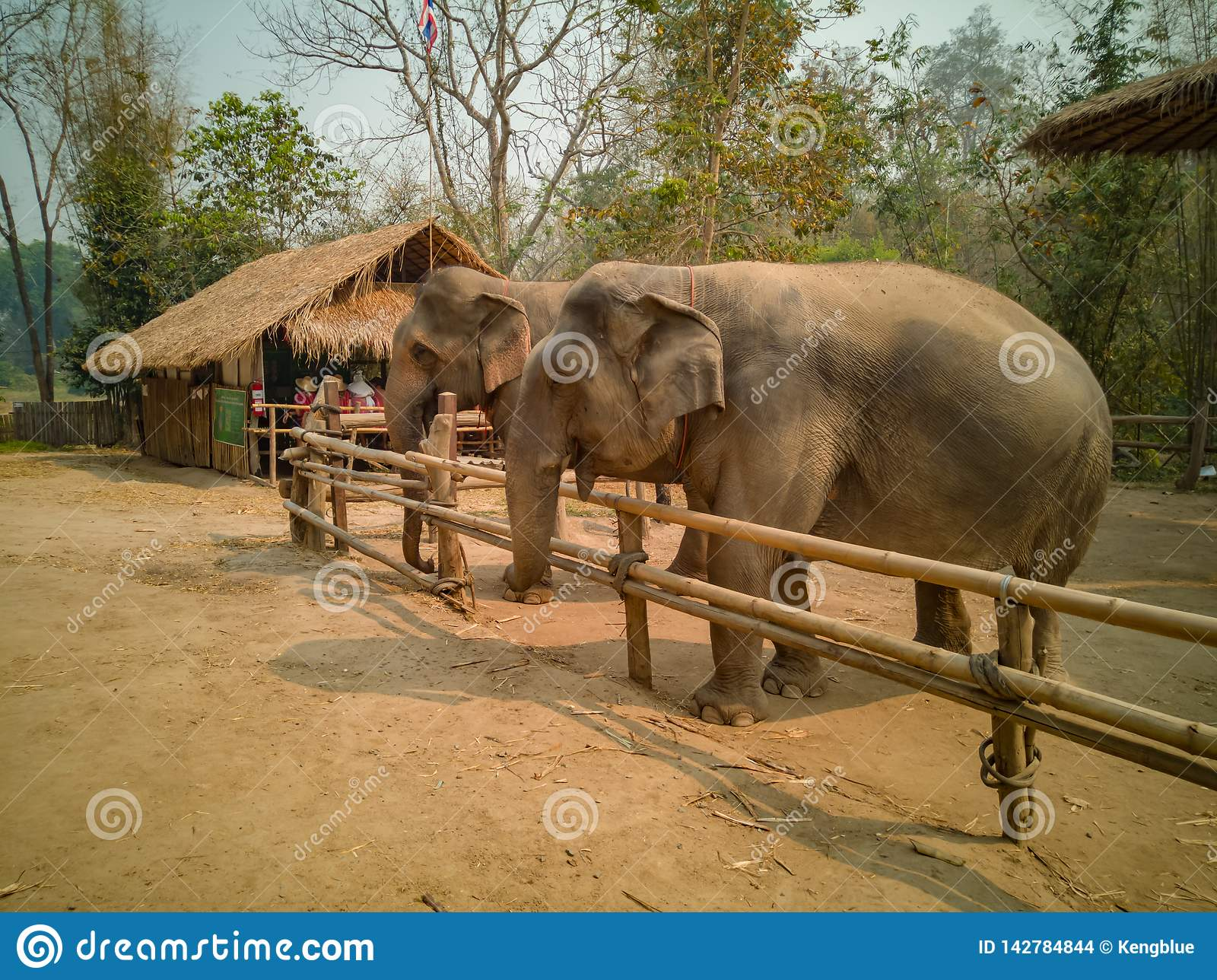 Семья слона счастлива в небольшом деревянном загоне