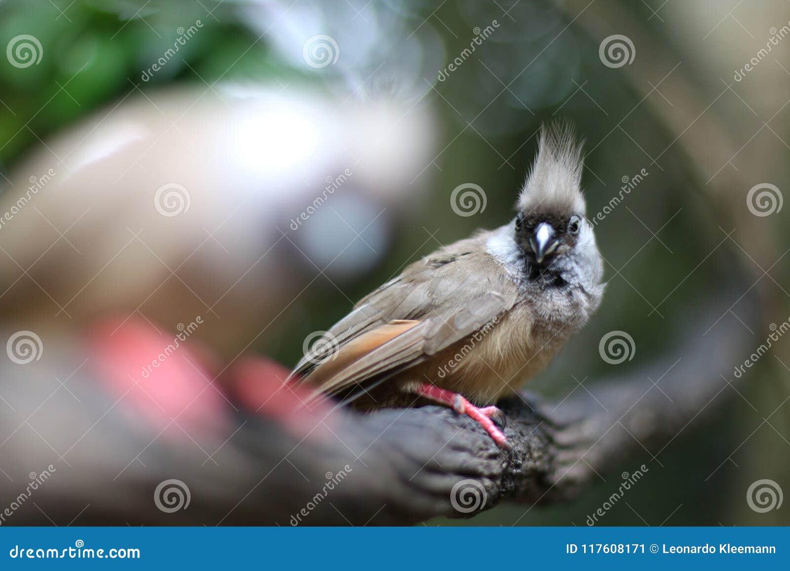 Серая птица