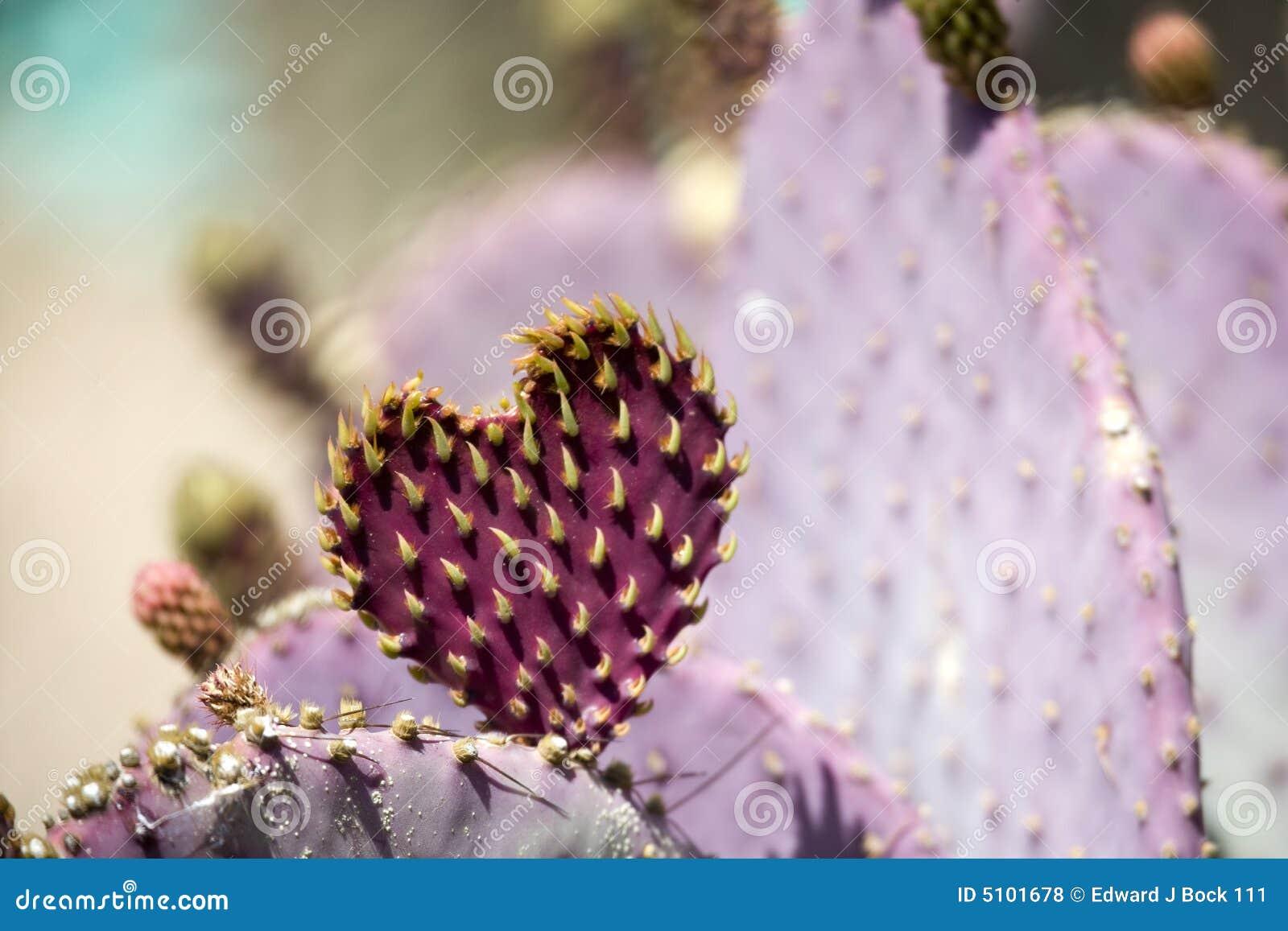 сердце кактуса
