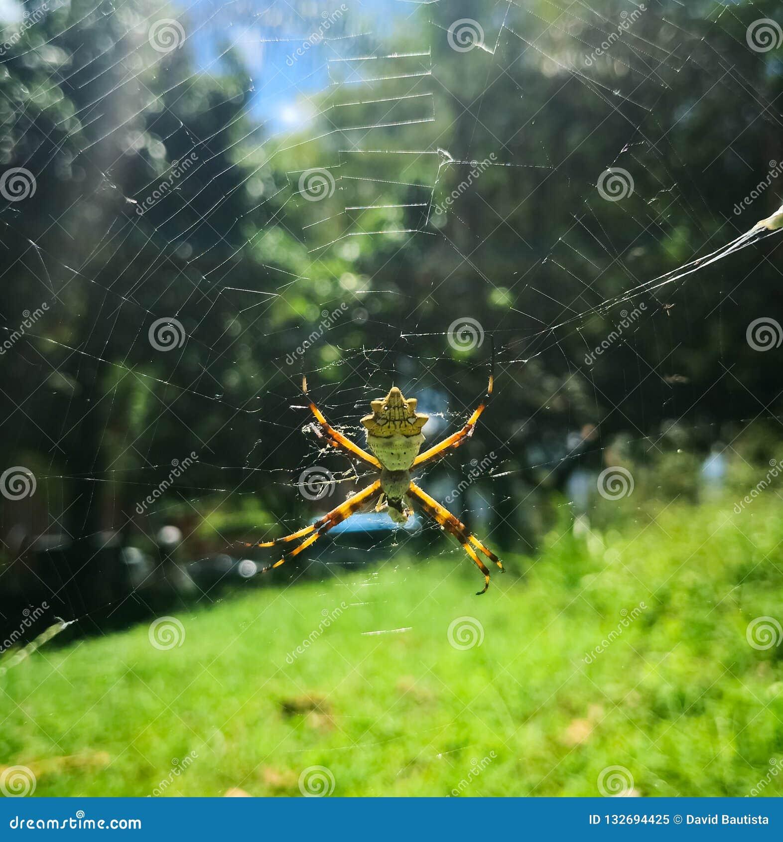 Серебряный паук в солнечном дне на парке