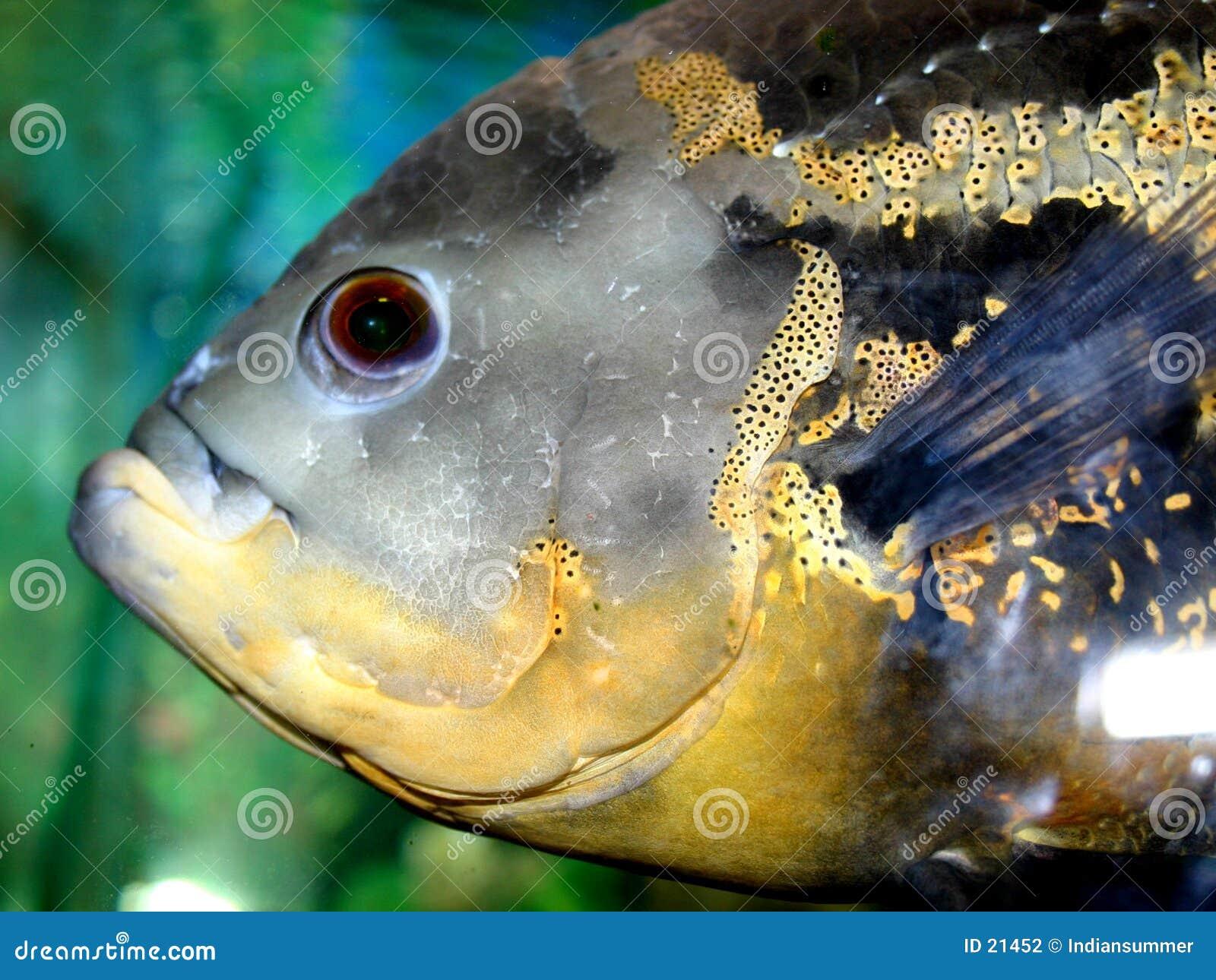 серия VI рыб