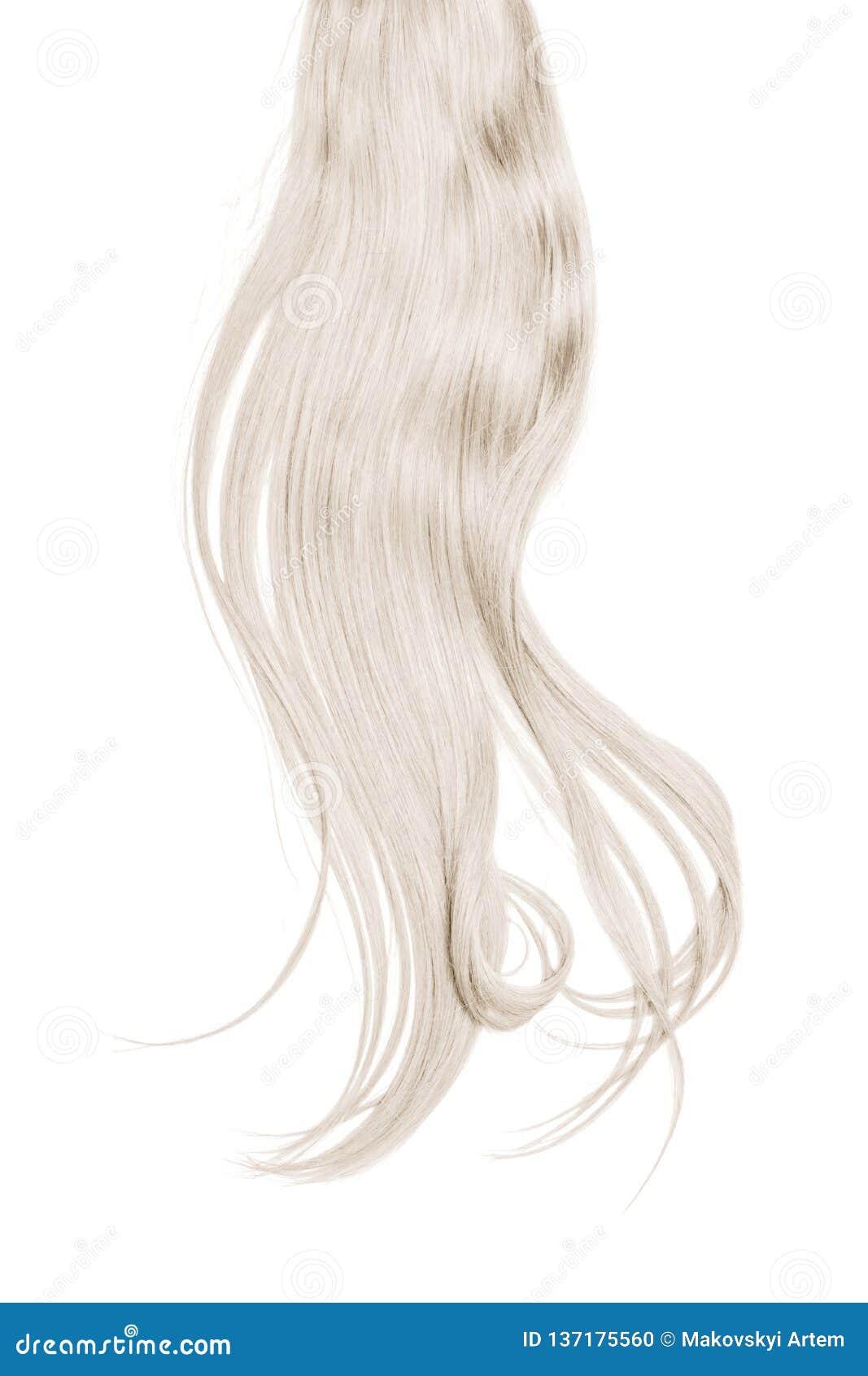 Серые волосы изолированные на белой предпосылке Длинный disheveled ponytail