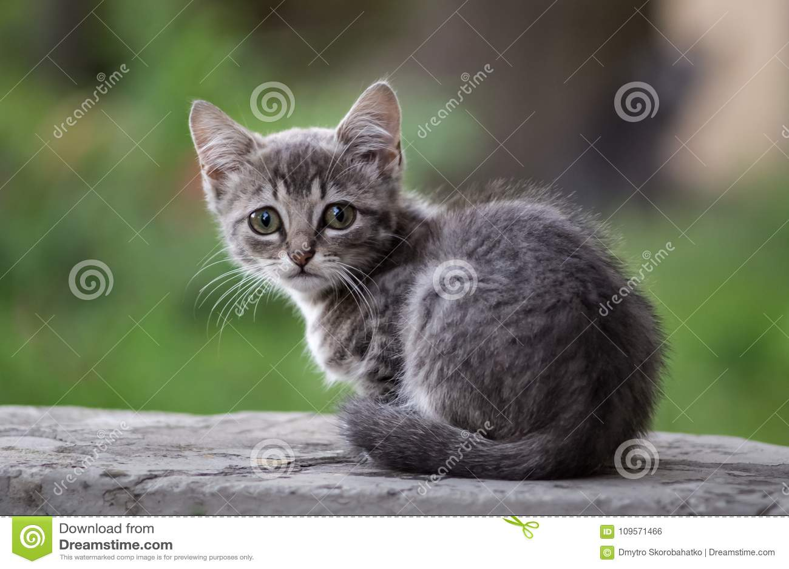 Серый бездомный котенок уныл