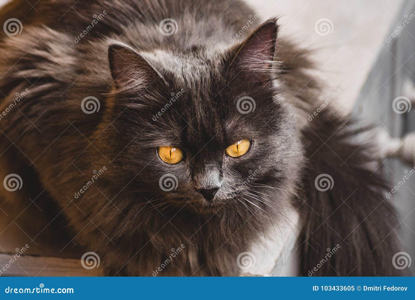 Серый кот сидя на windowsill