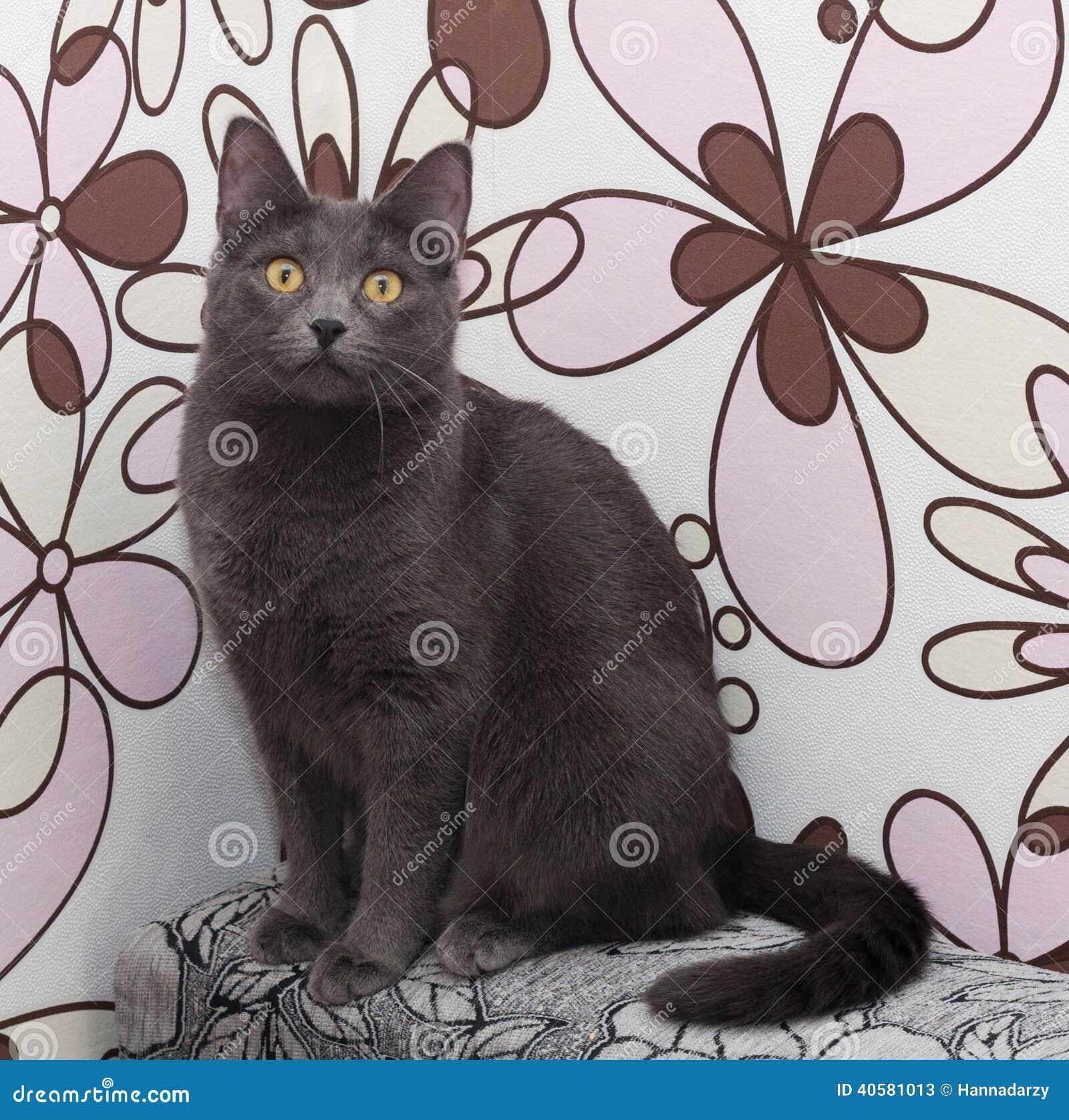 Серый кот сидя на красочном