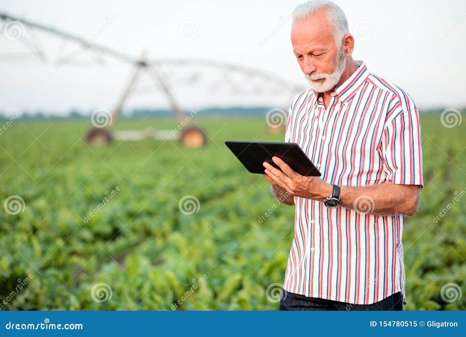 Серьезные серые с волосами старшие agronomist или фермер используя планшет в поле сои