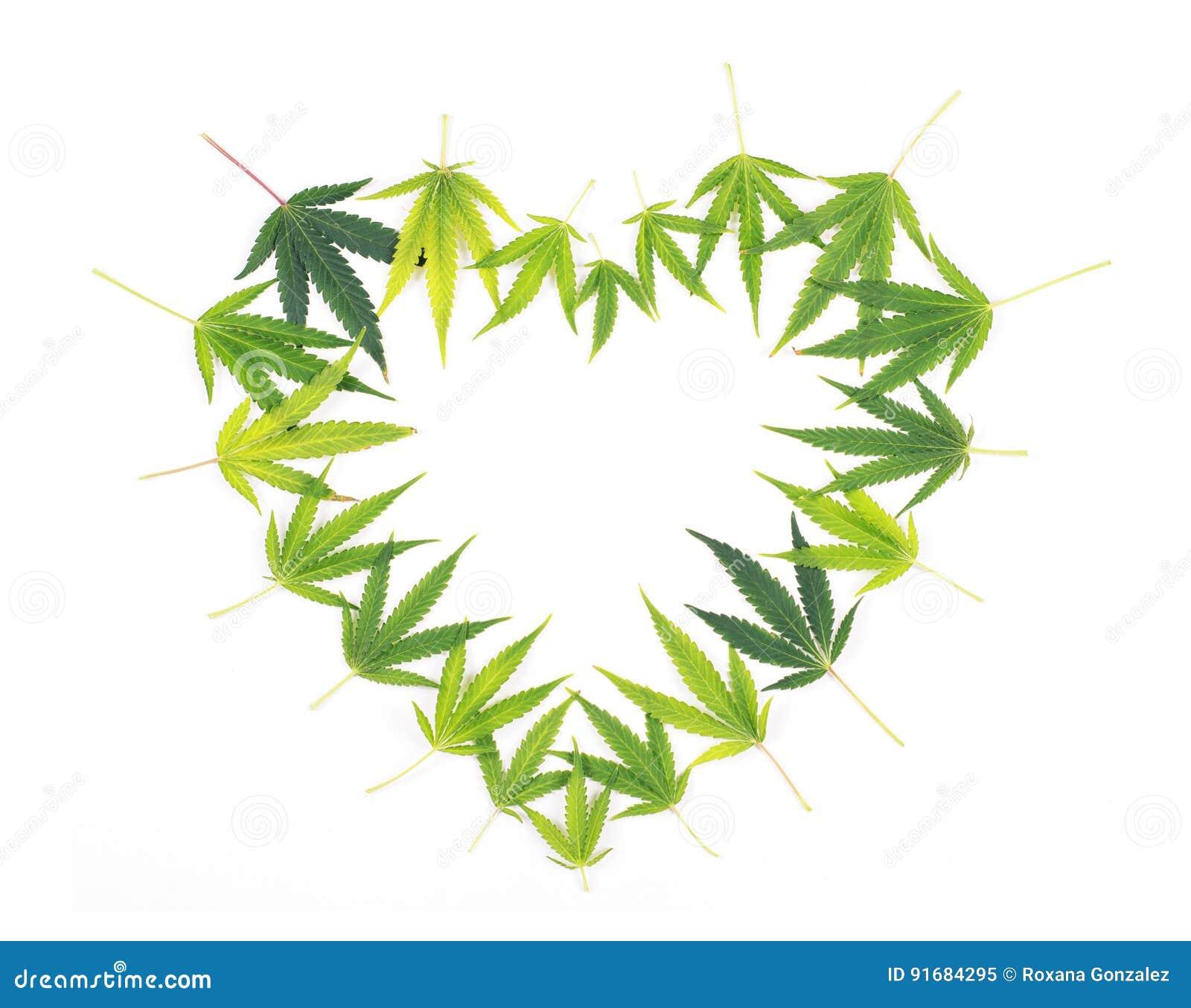 Сердце от конопли что такое гашиш план марихуана анаша