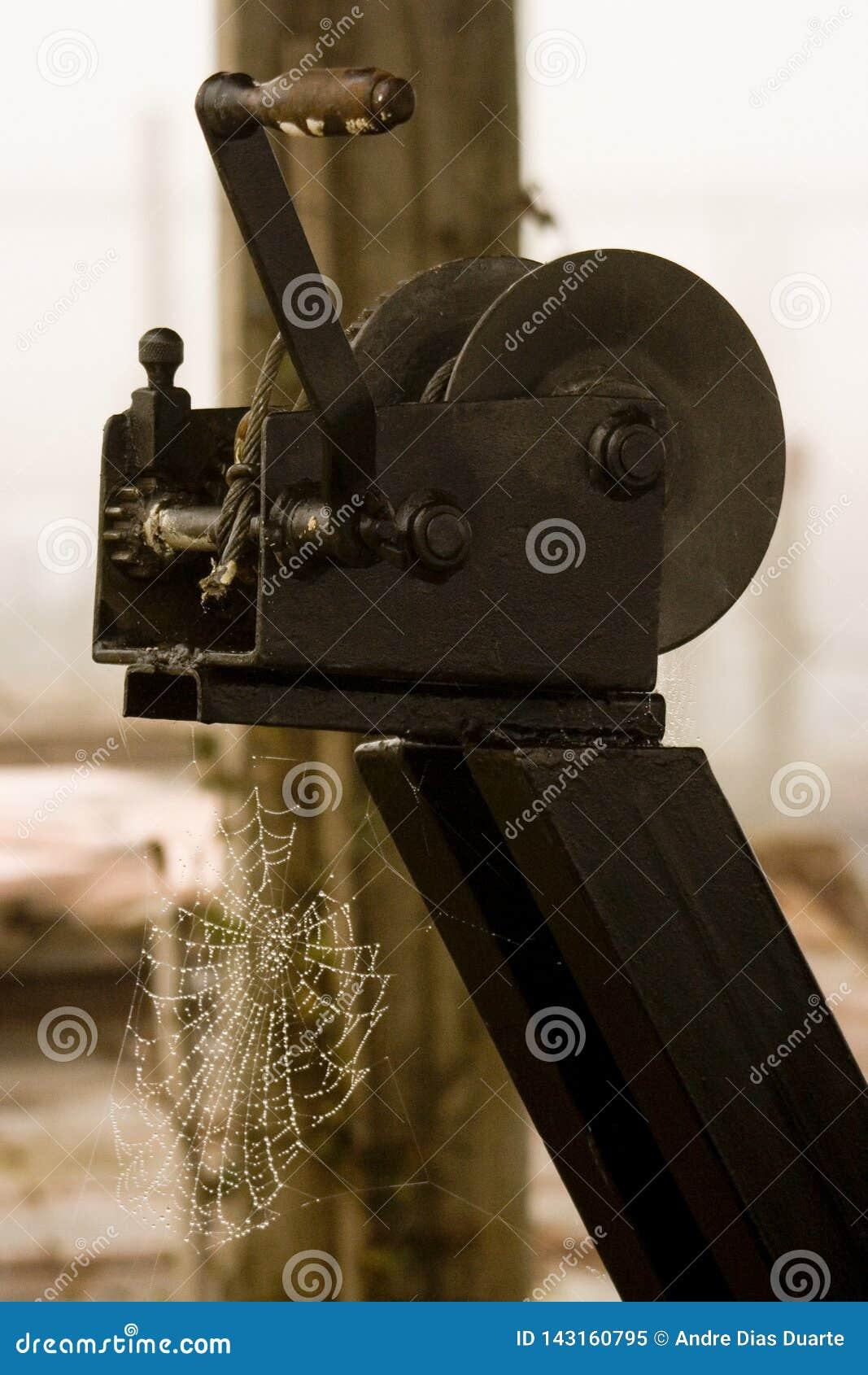 Сеть паука вися на деревянной структуре