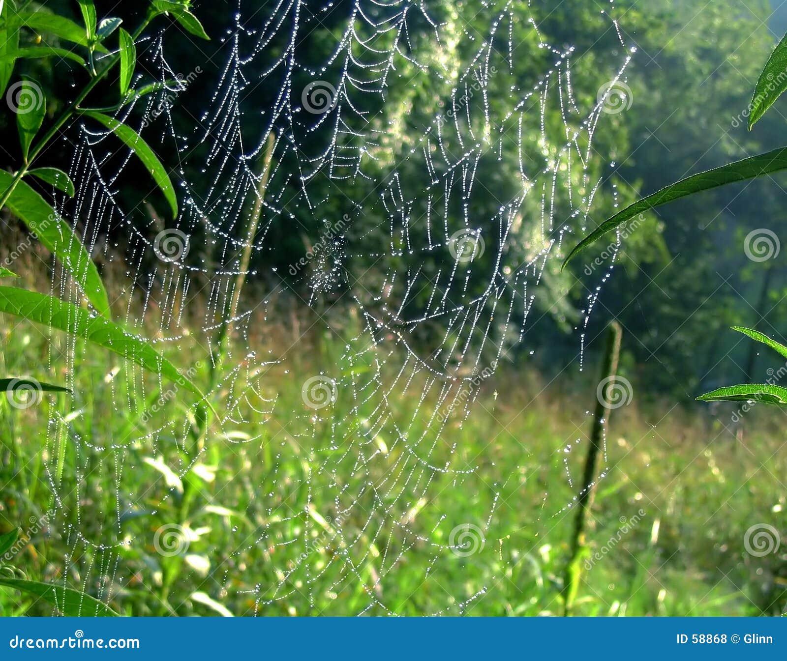 сеть паука s