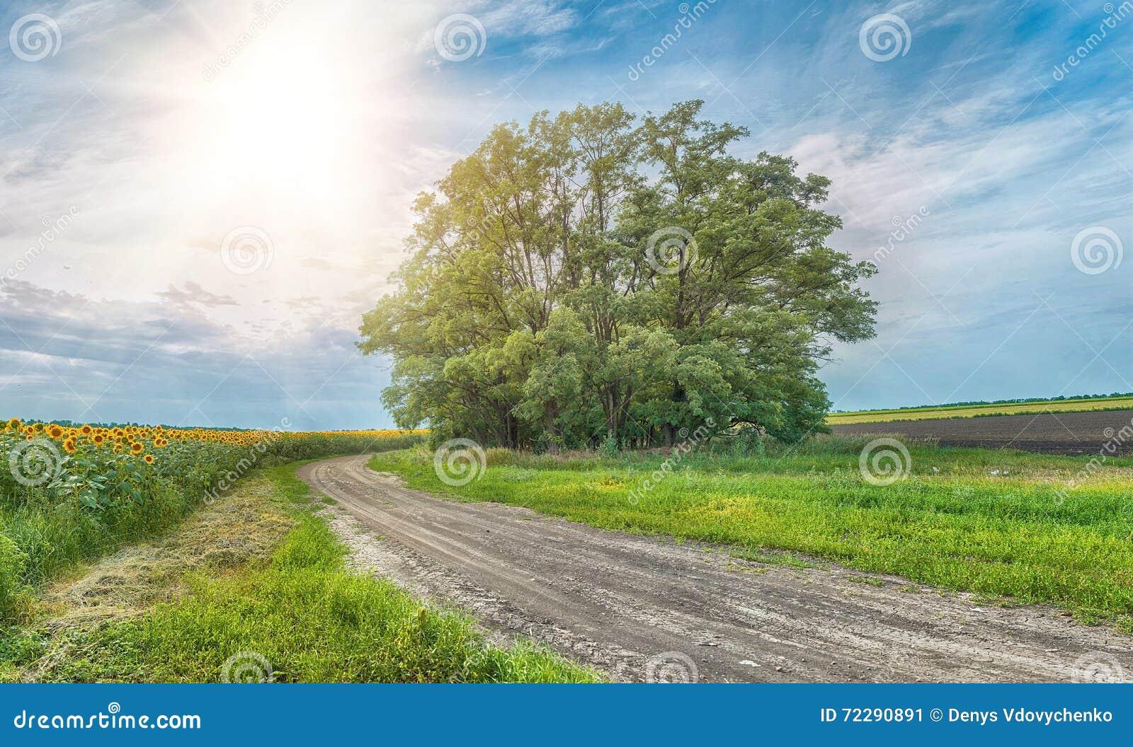 Download Сельская извилистая дорога и солнечное голубое небо с солнцецветами Стоковое Изображение - изображение насчитывающей ландшафт, место: 72290891