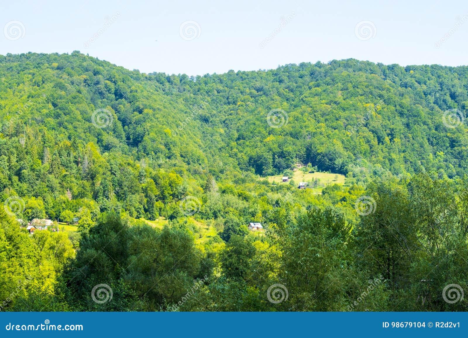 Сельское свойство в лесе
