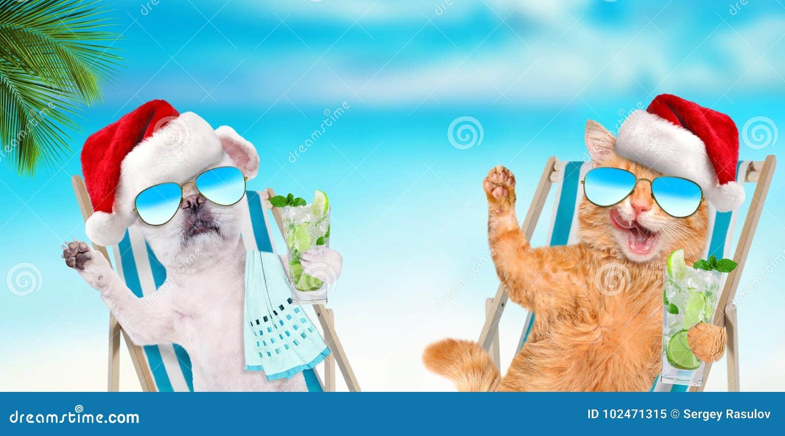 Сидеть кота и собаки ослабляя на deckchair с коктеилем на предпосылке моря