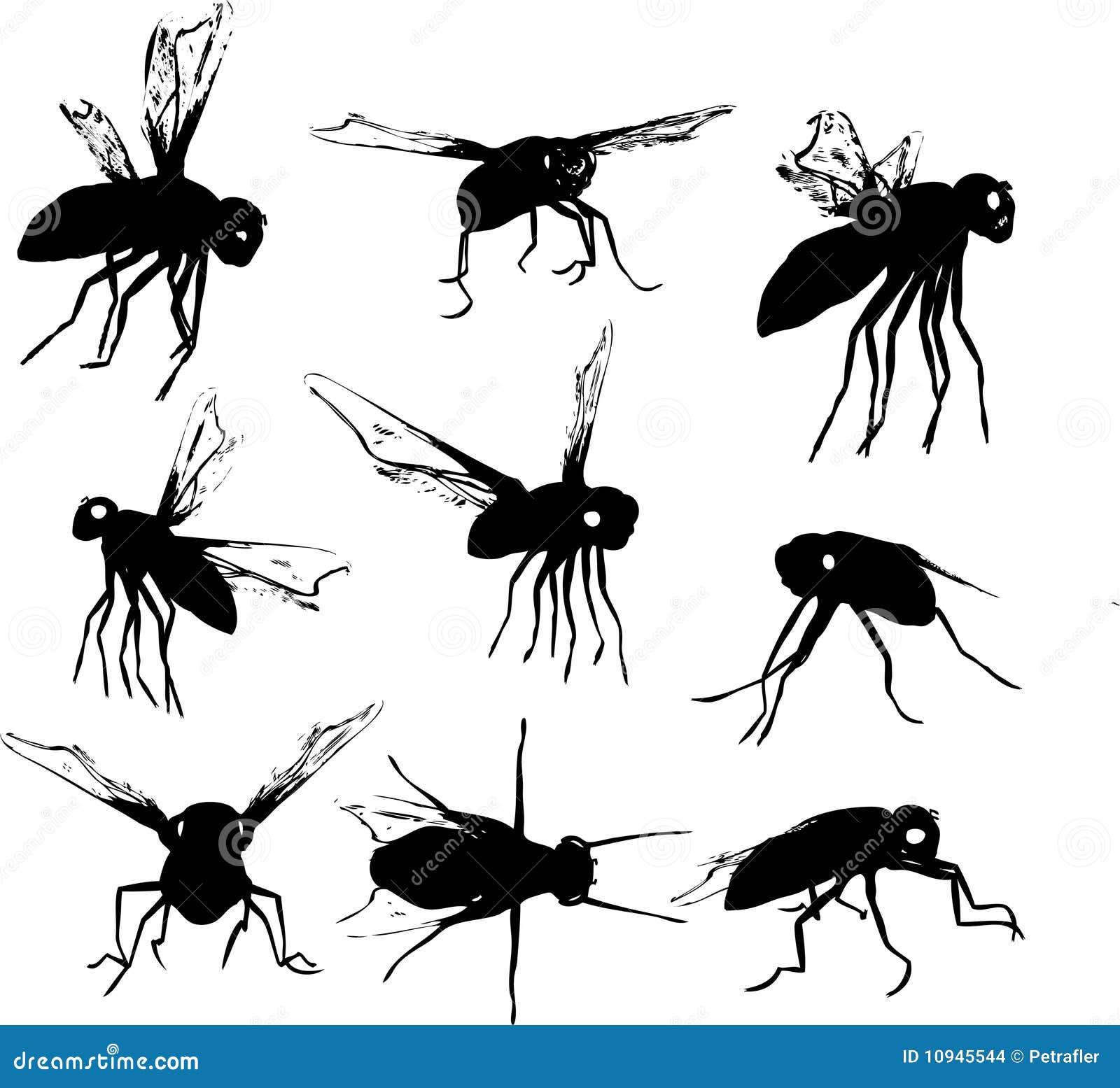 силуэты мухы