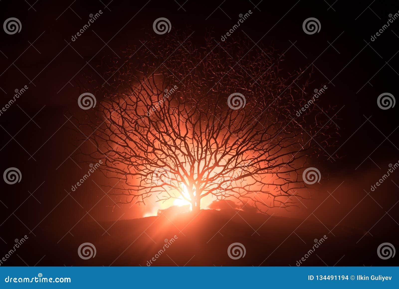 Силуэт страшного дерева хеллоуина с стороной ужаса на темном туманном тонизированном огне Страшная концепция хеллоуина дерева ужа
