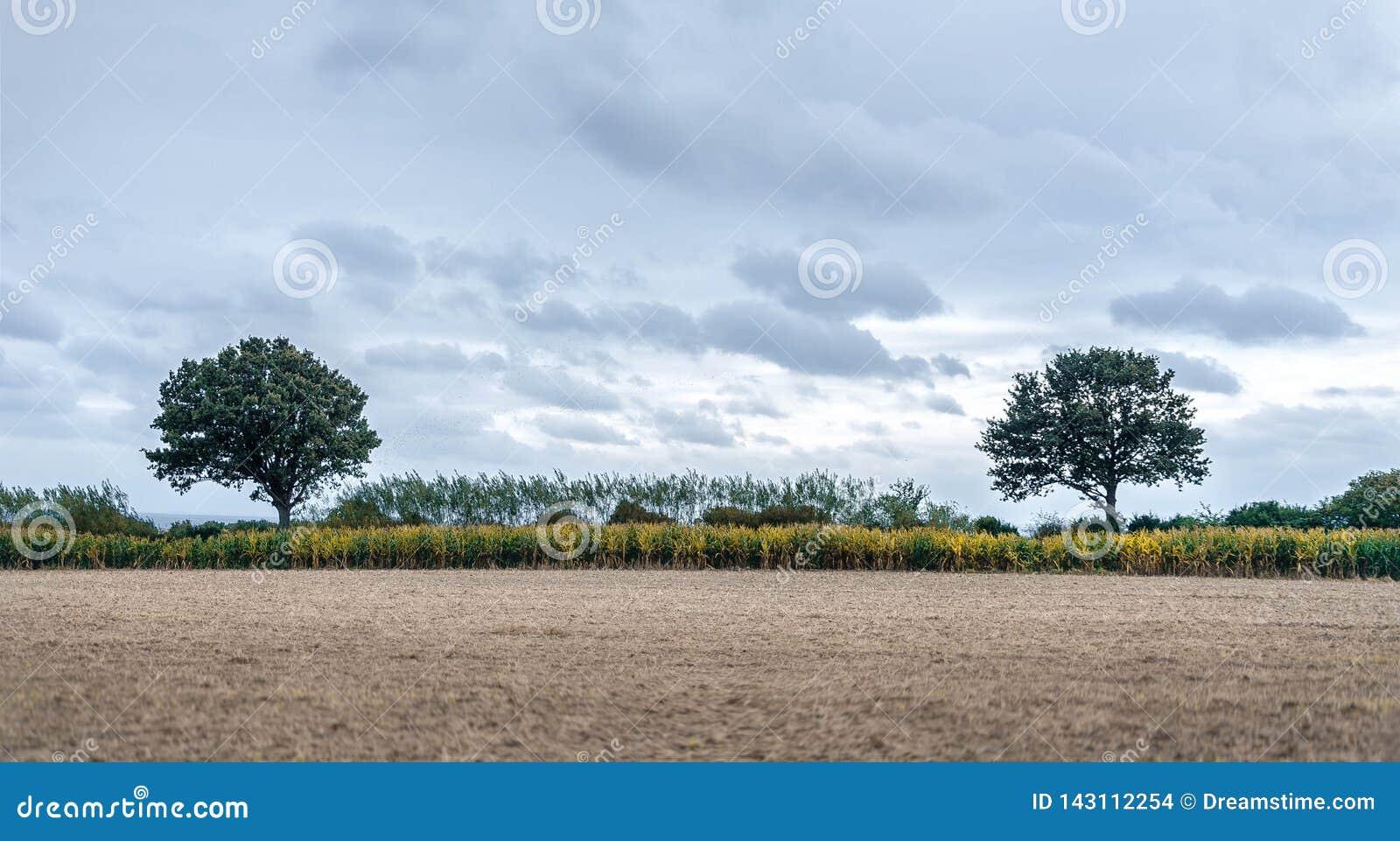2 симметричных дерева со сжатым полем на переднем плане и голубыми облаками на предпосылке