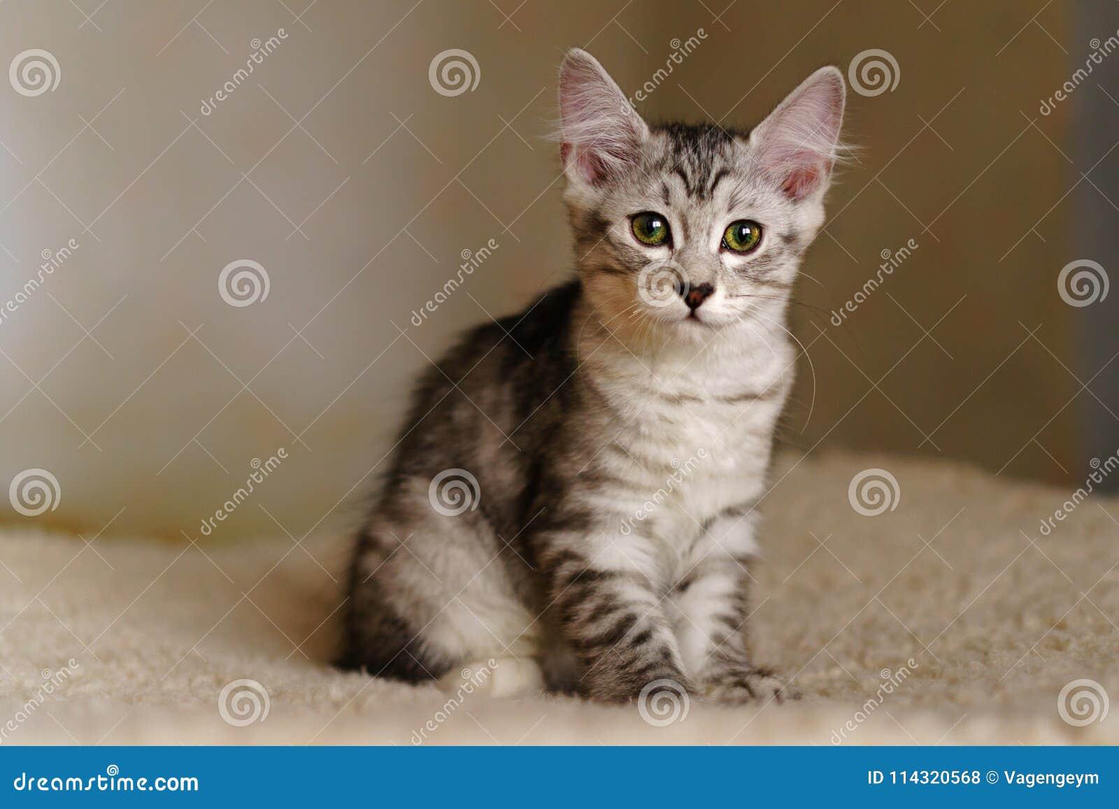 Симпатичный котенок племенника