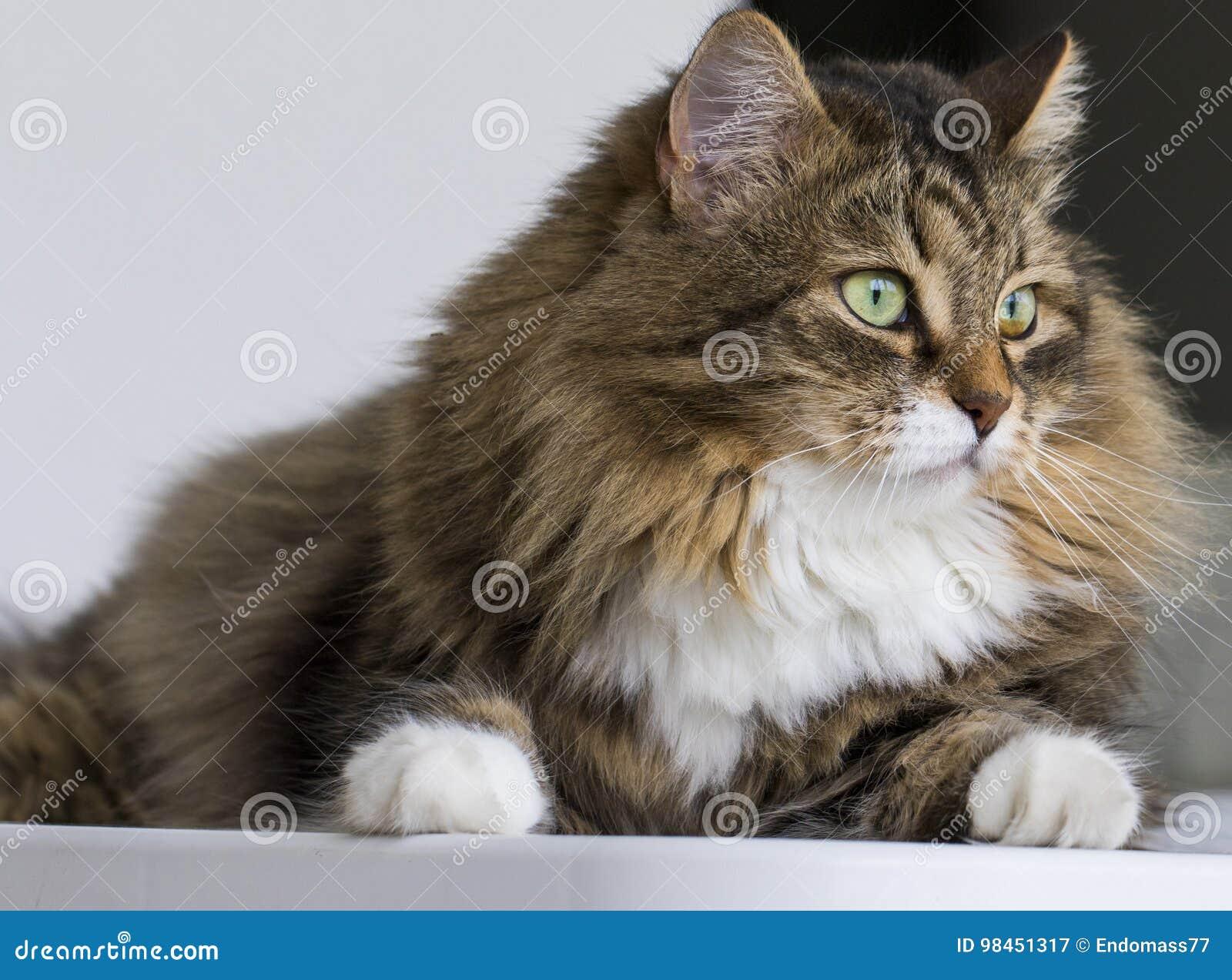 Симпатичный кот в доме смотря вне, коричневый кот tabby