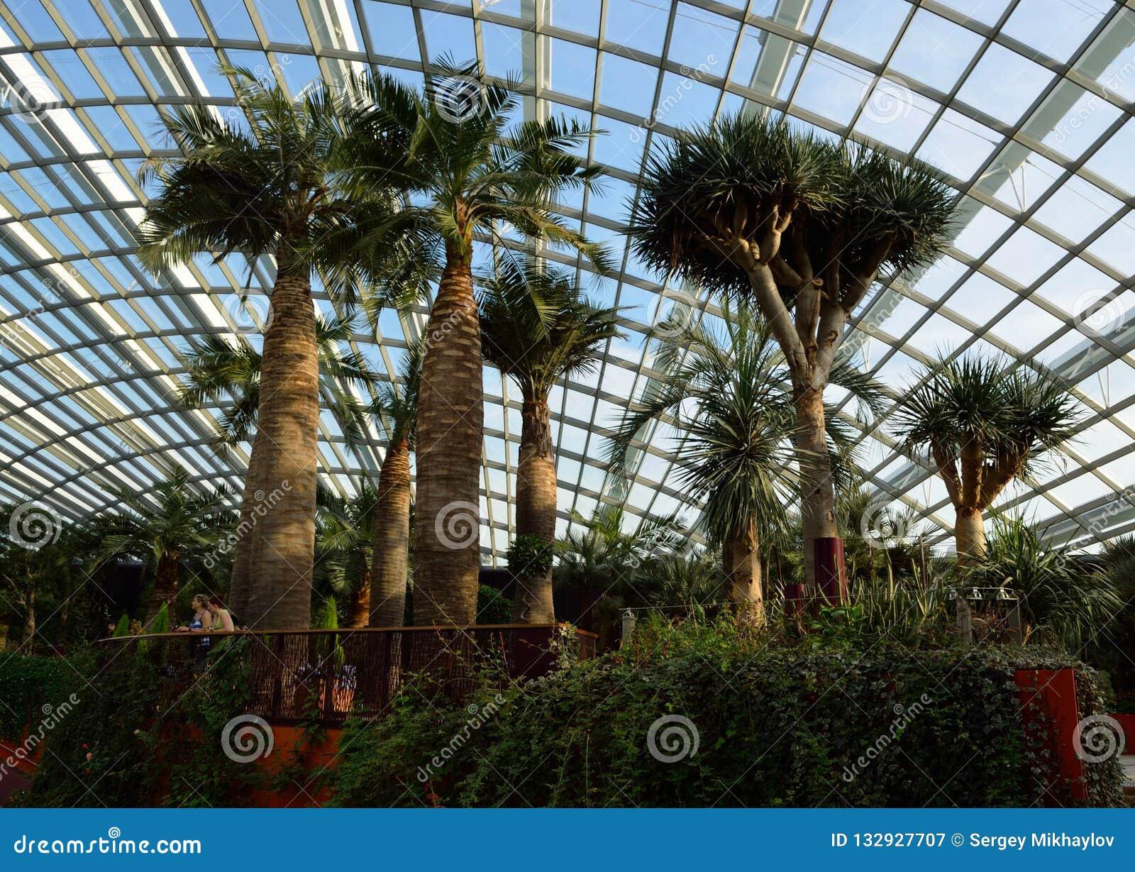 Сингапур - 28-ое апреля 2014: Пальмы в куполе цветков в садах заливом