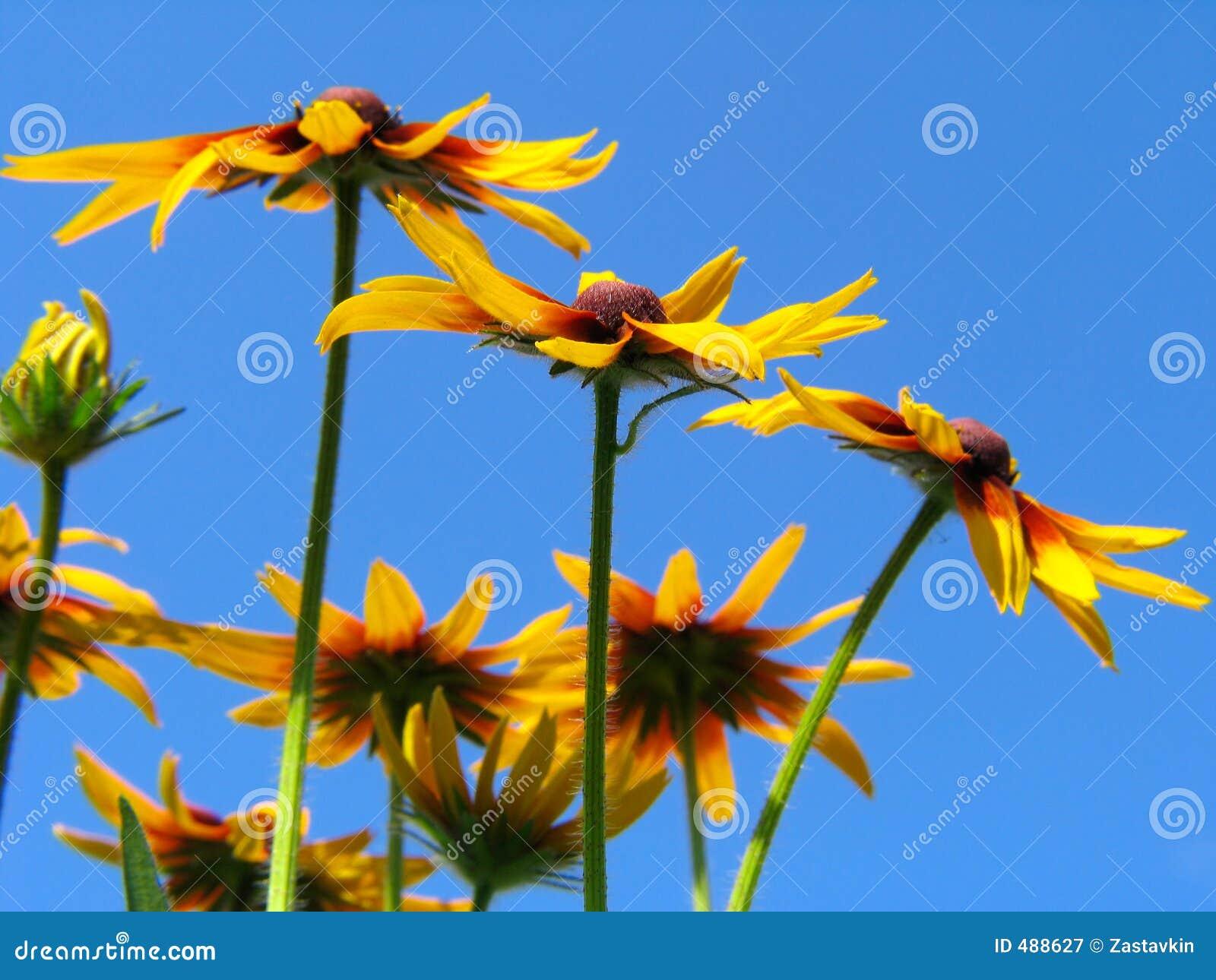 синь предпосылки цветет небо