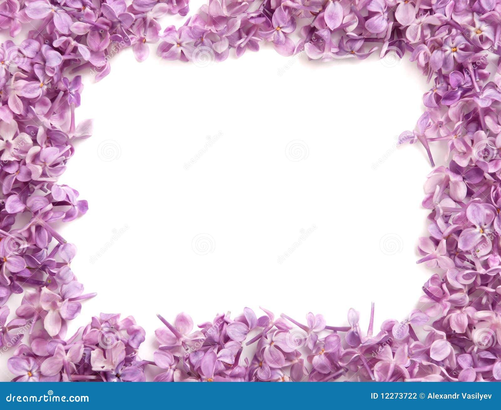 Фото цветов нежных