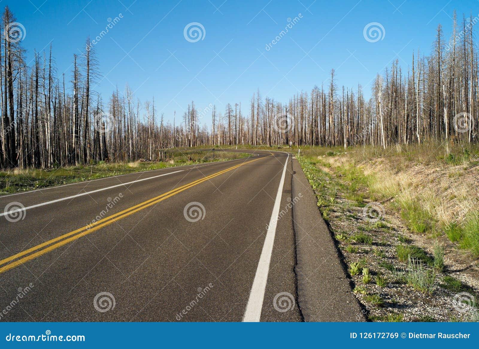 Сиротливая дорога через лес