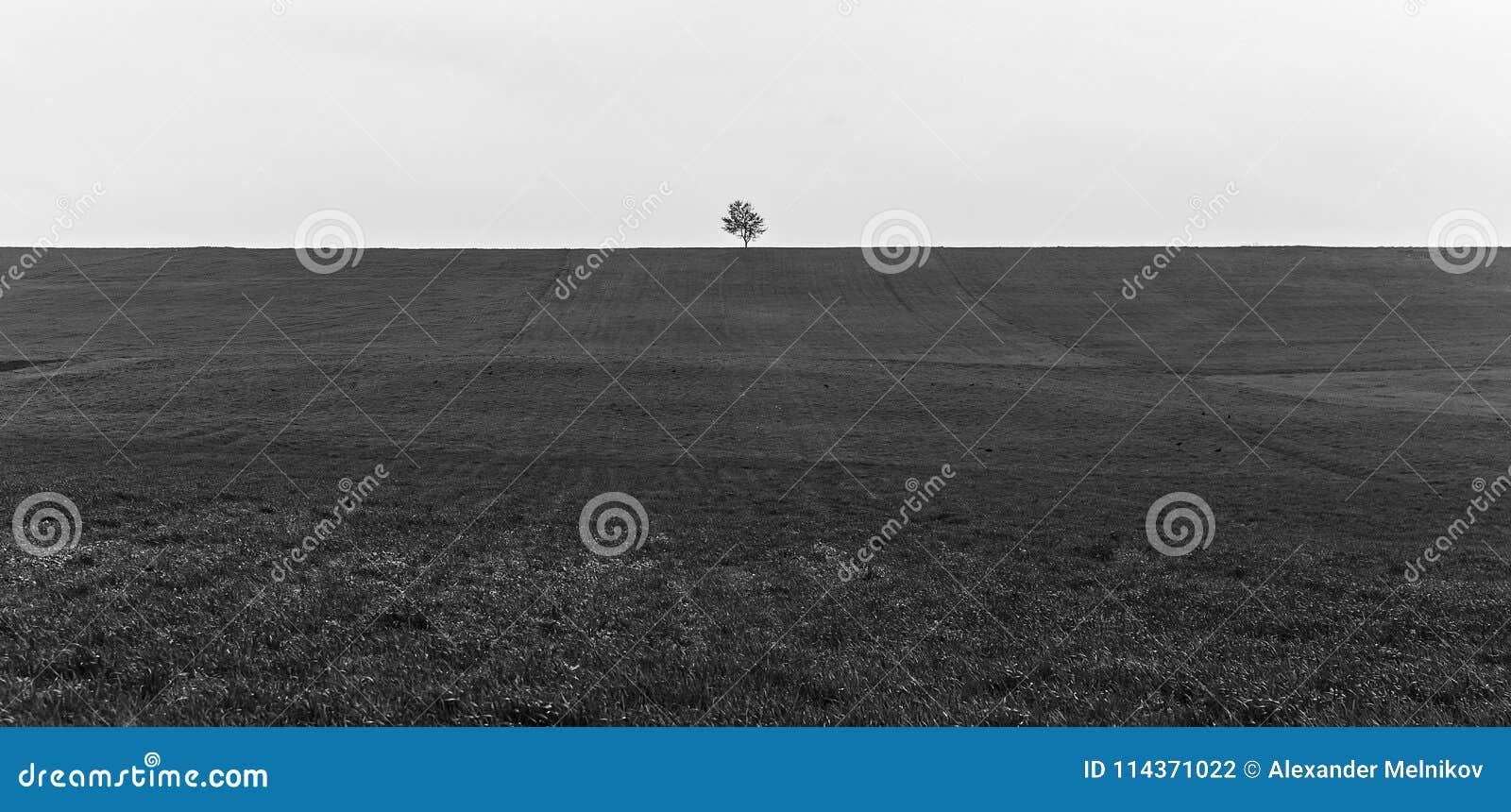 Сиротливое дерево на поле весны