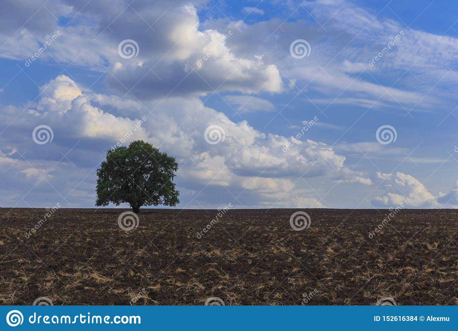Сиротливое положение дерева на вспаханном поле на предпосылке красивых облаков