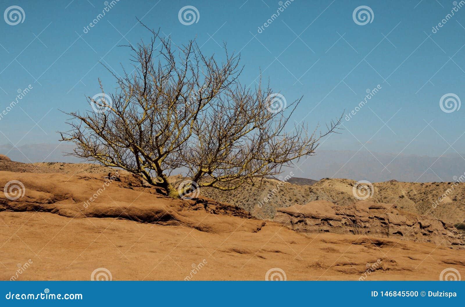 Сиротливый куст в пустыне в Аргентине