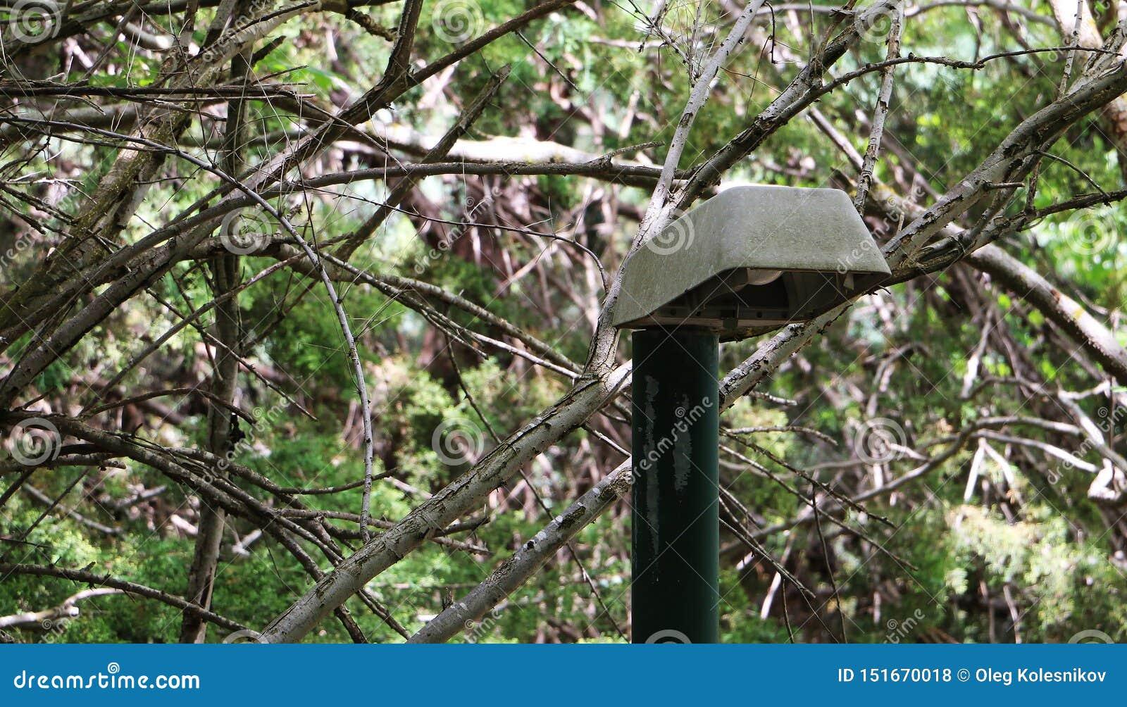 Сиротливый фонарик в парке на предпосылке деревьев Зеленые деревья и городская жизнь