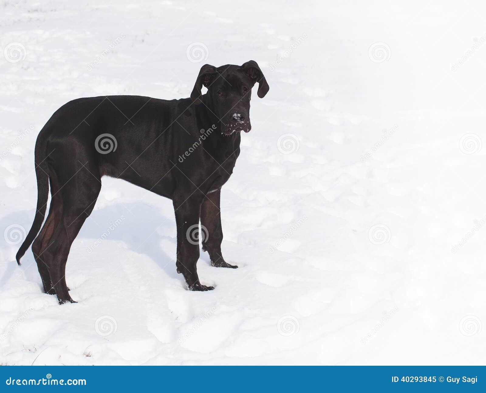 Сиротливая собака