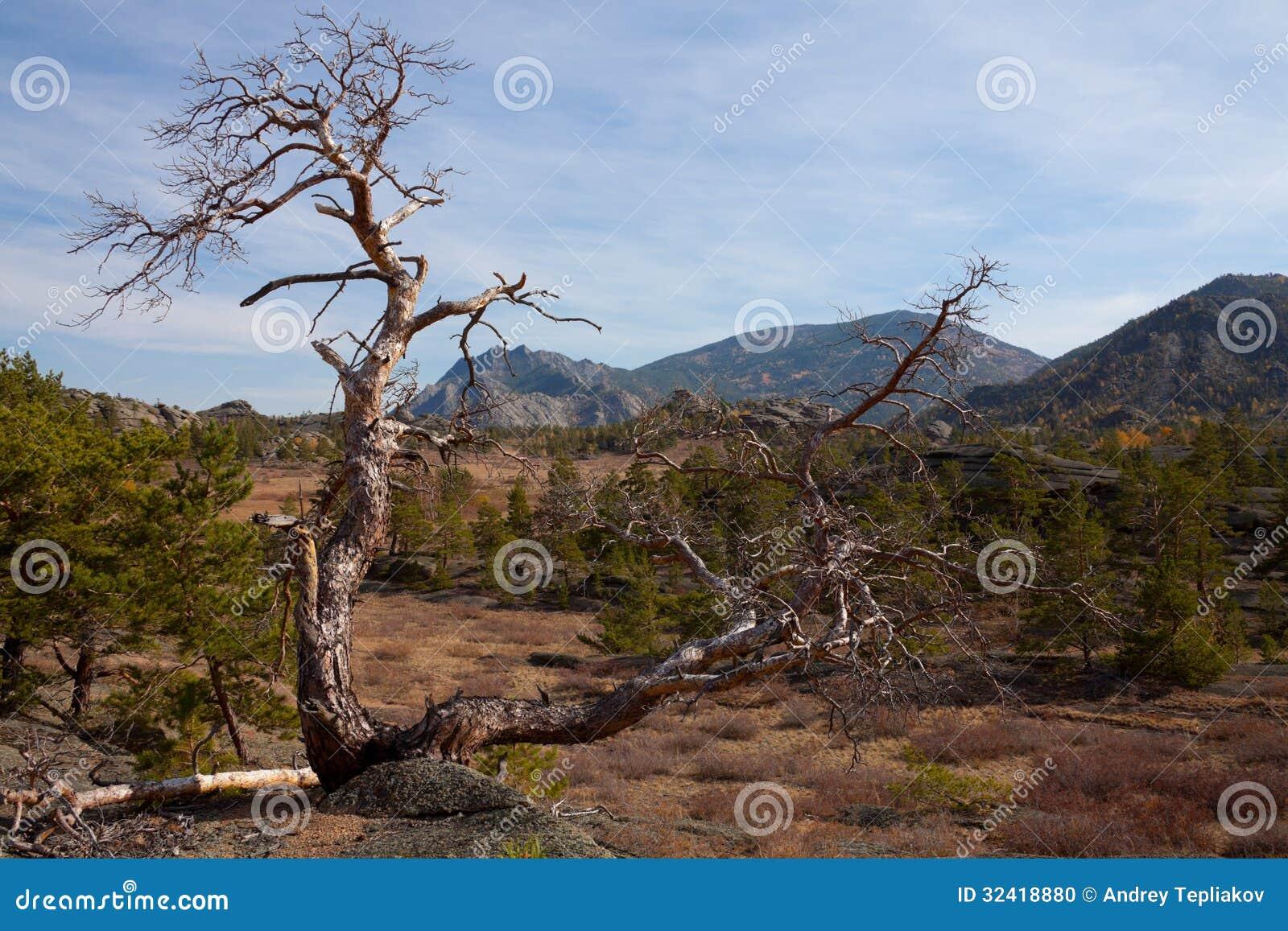 Сиротливое сухое дерево в горах