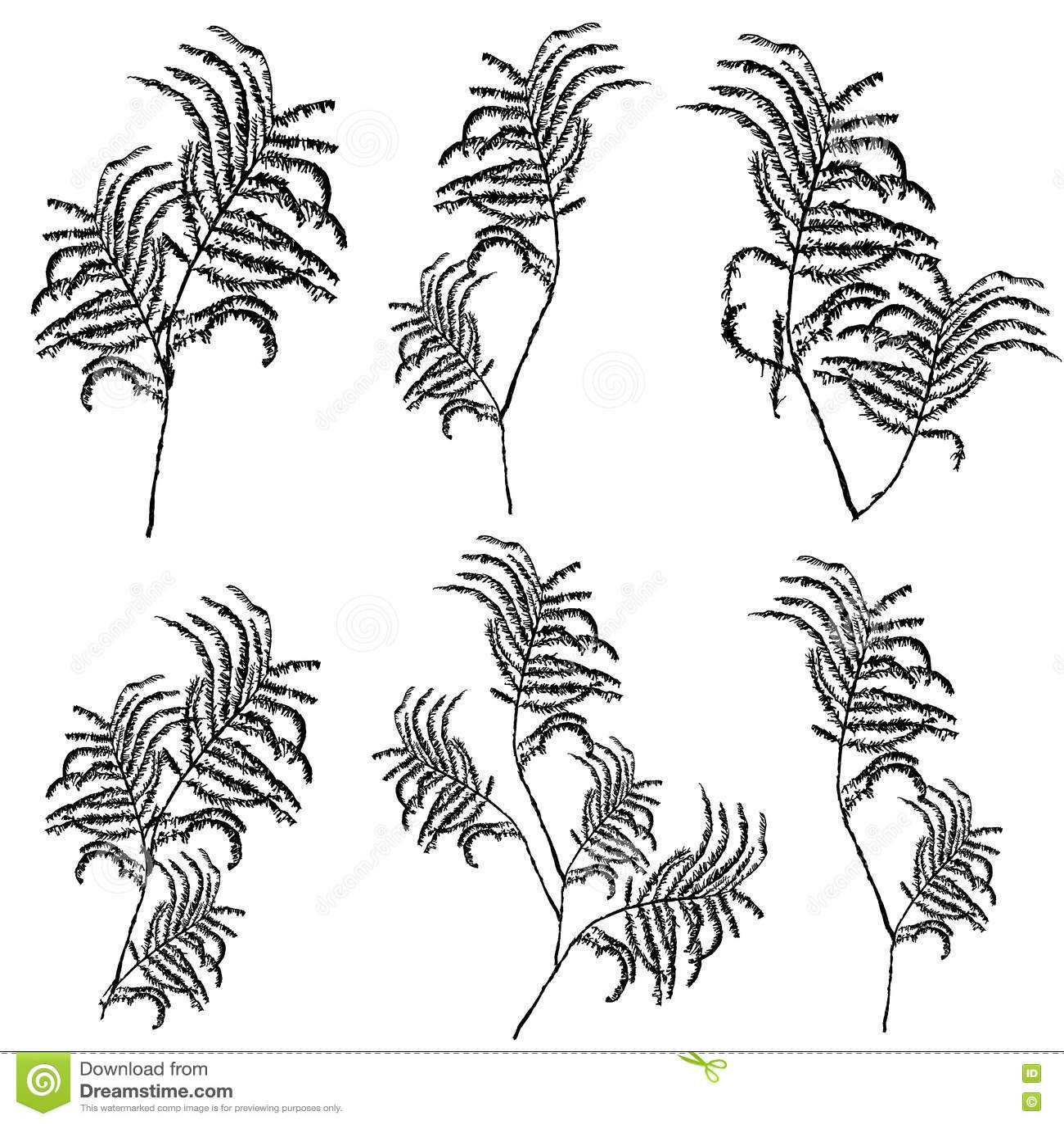 Download Силуэты листьев, ботаническая иллюстрация изолированная на белой предпосылке, Monochrome флористический чертеж вычерченная рука Иллюстрация вектора - иллюстрации насчитывающей естественно, листво: 72286414