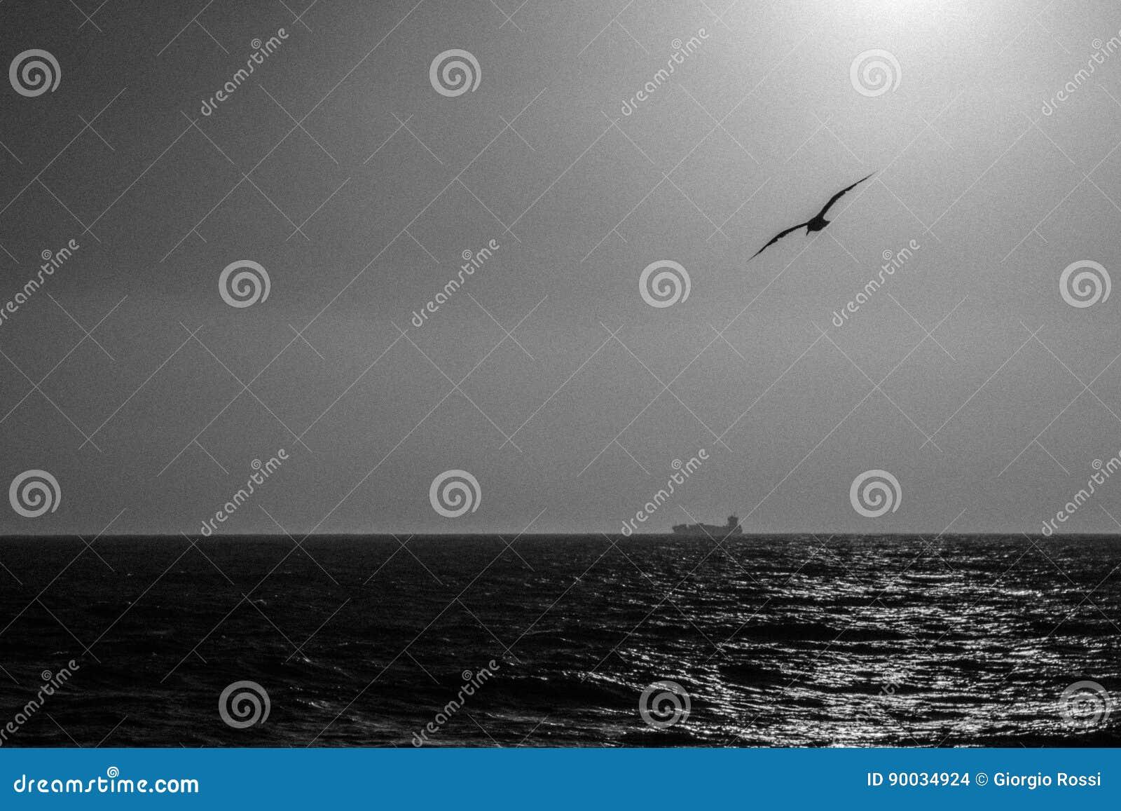 Море а над морем чайки скачать.