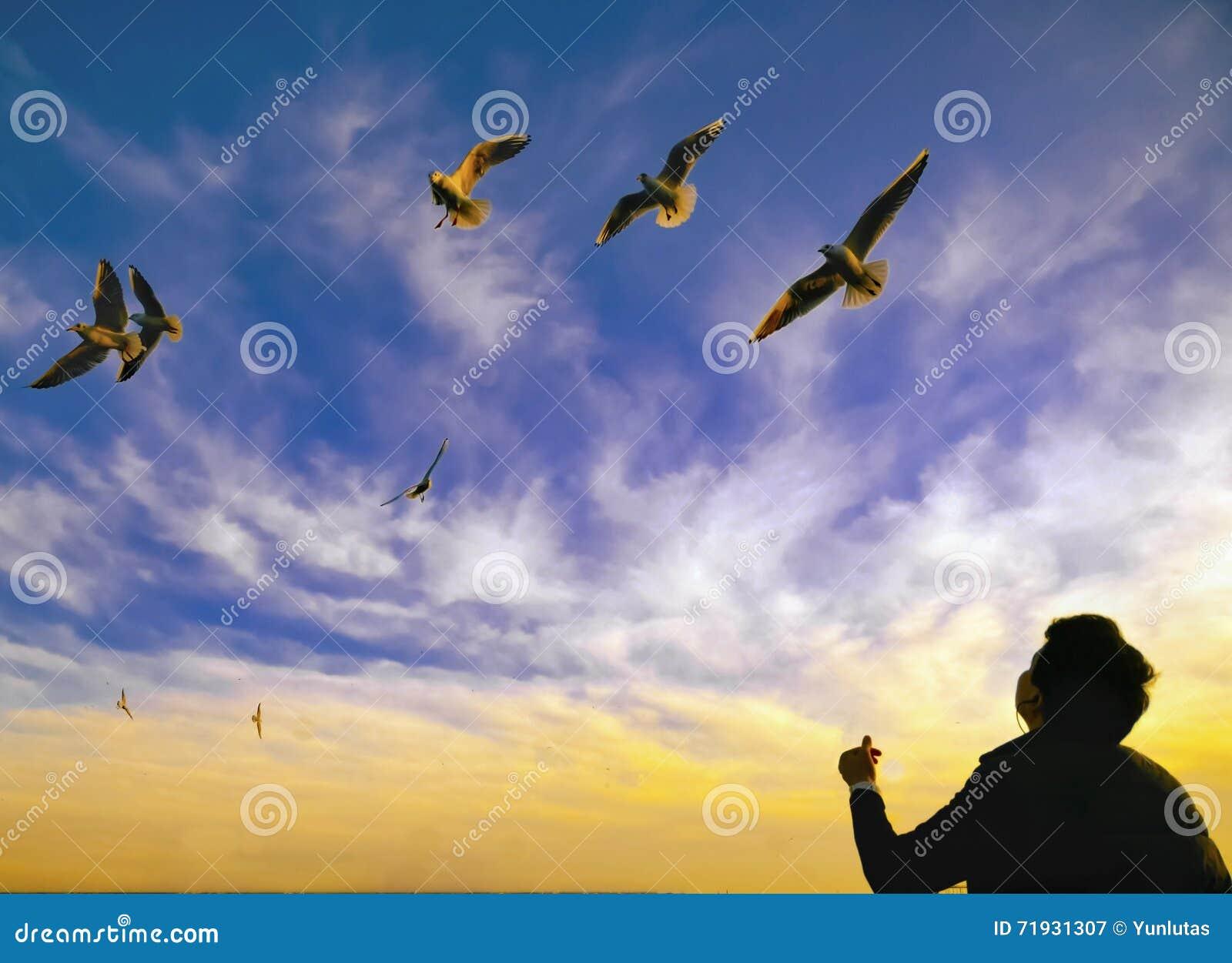 Силуэт чайок и людей захода солнца