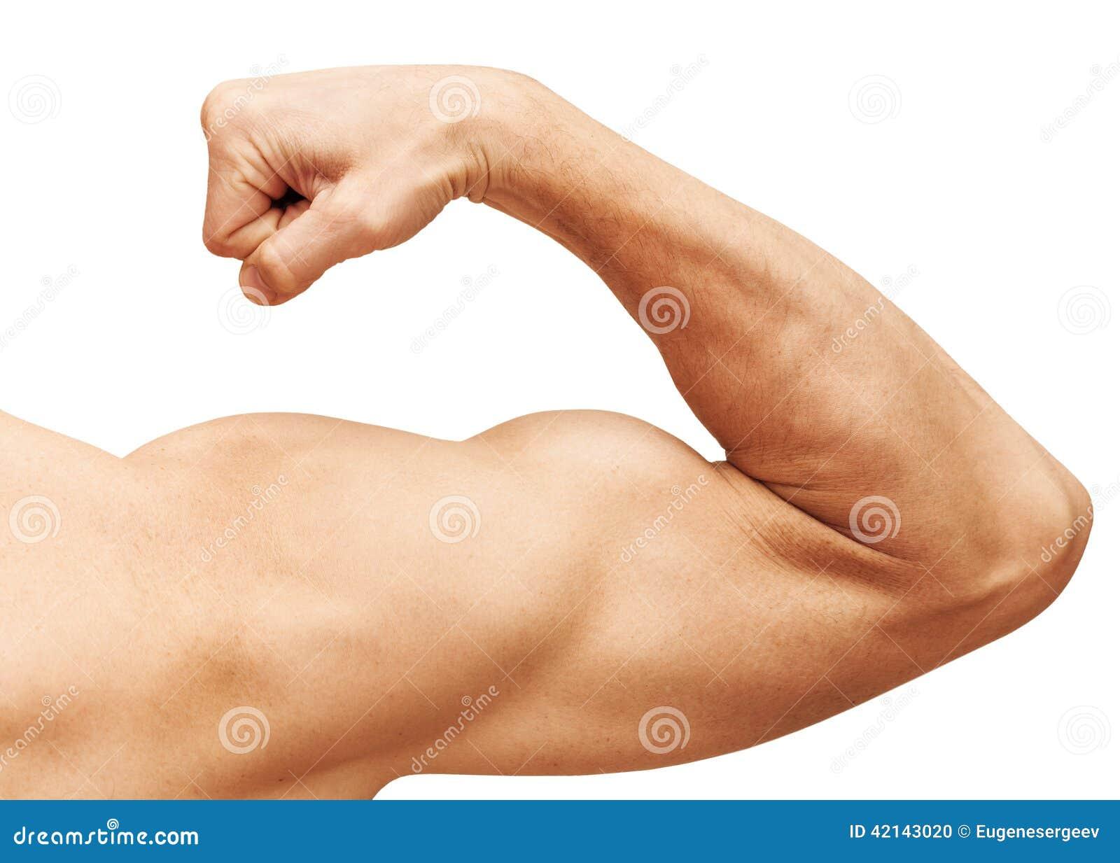 Сильная мужская рука показывает бицепс изолированный на белизне