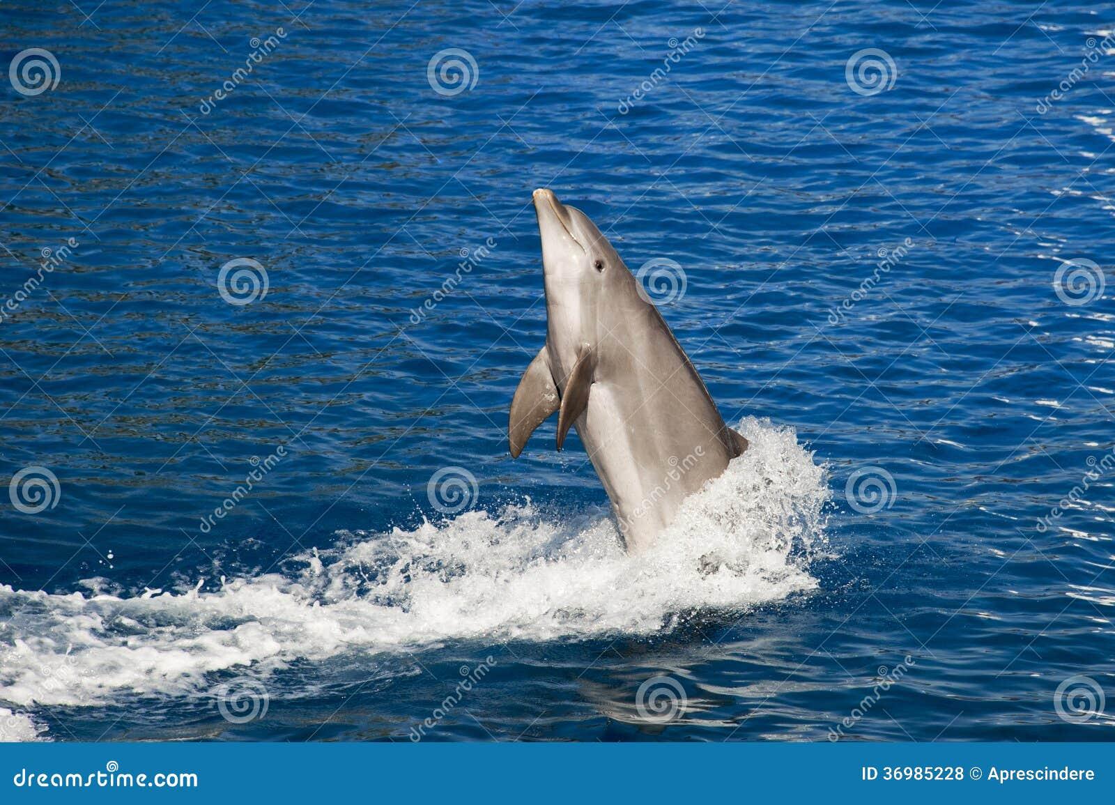 Скакать дельфина