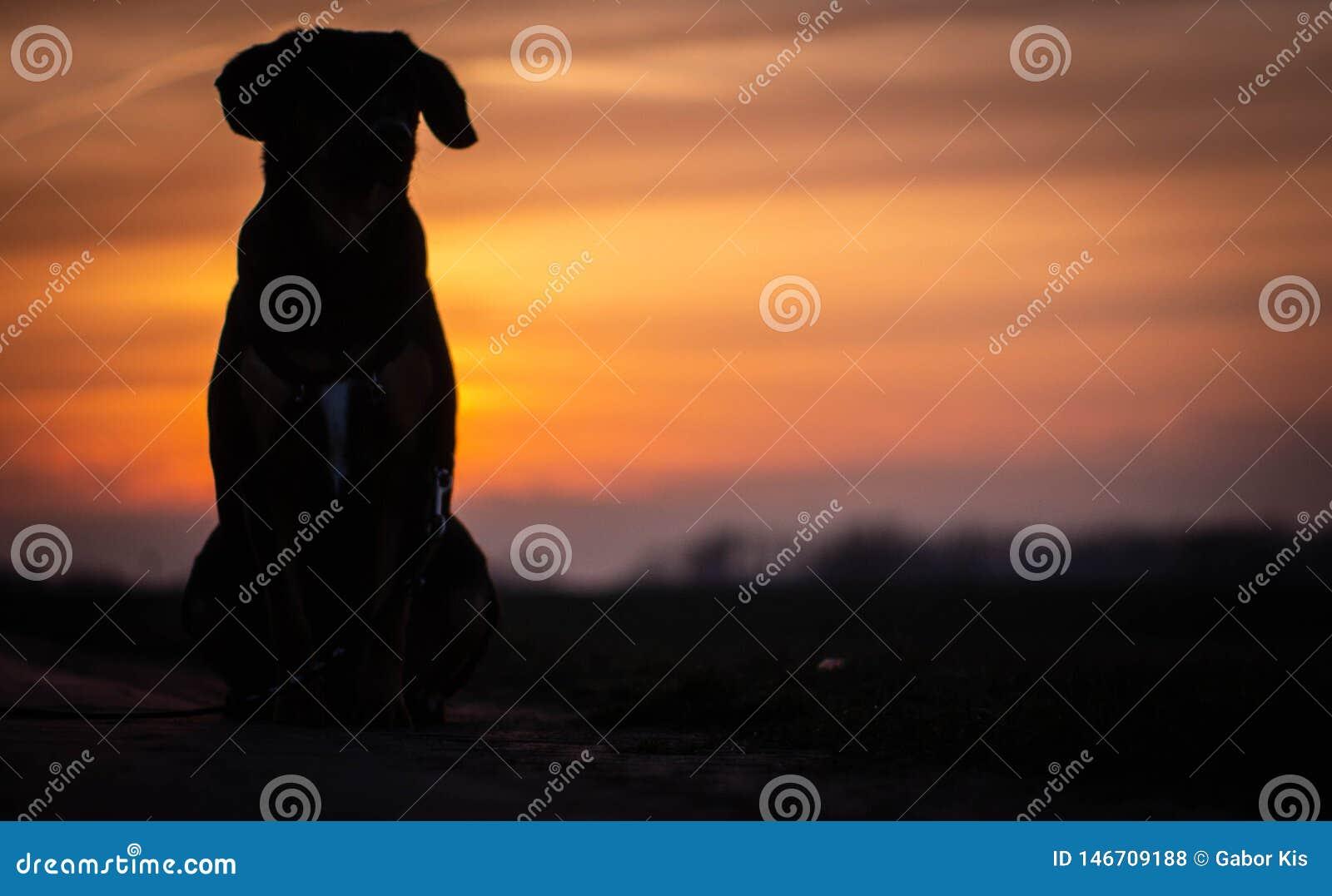 Скалистый собака и заход солнца