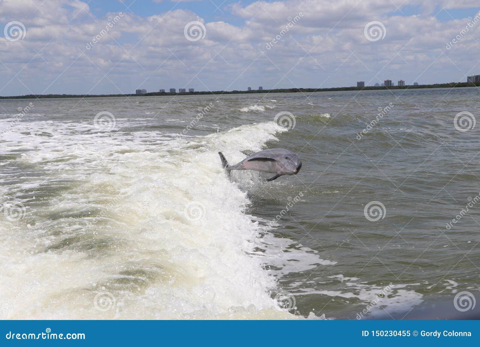 Скача дельфин