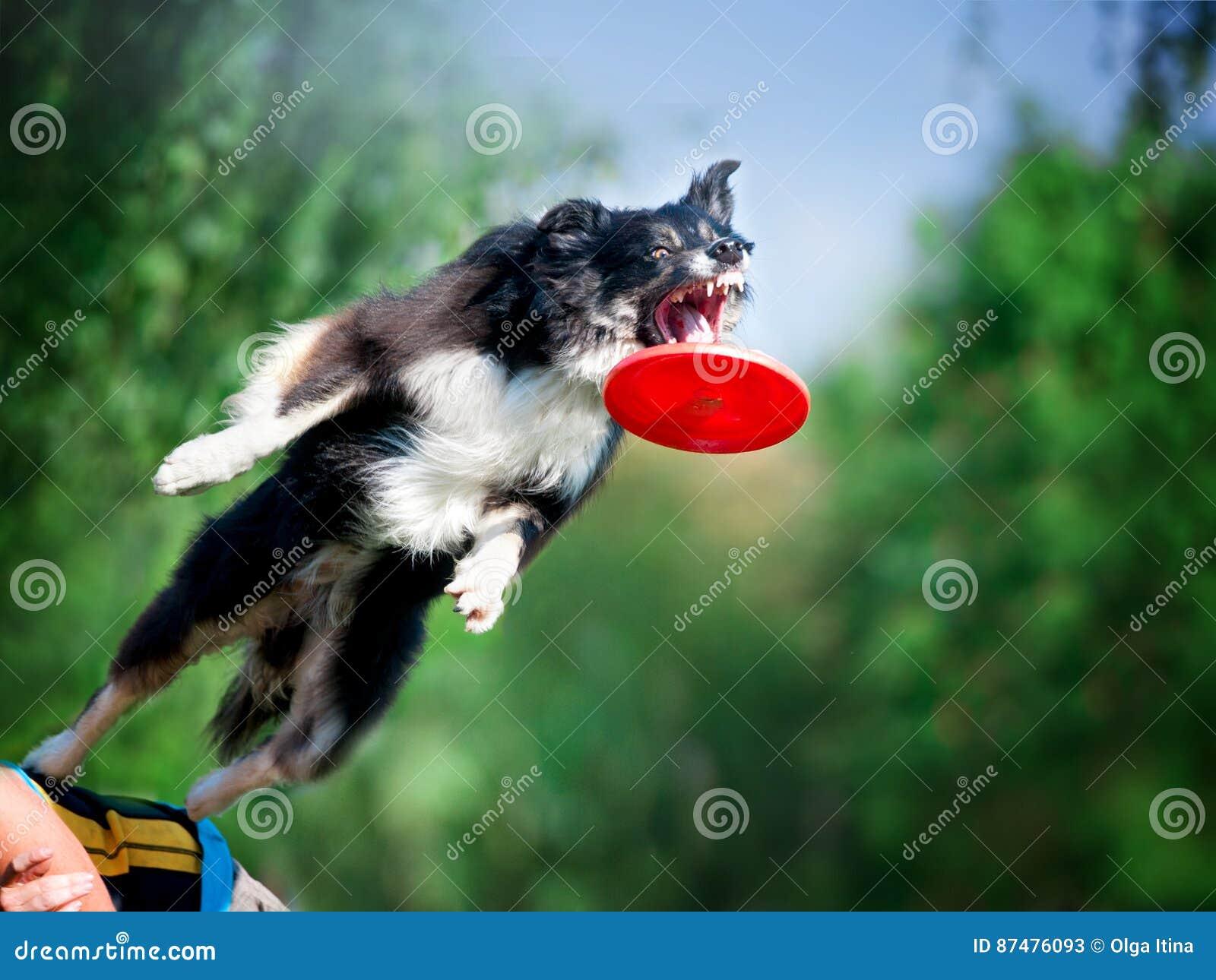 Скача Коллиа границы улавливая frisby диск