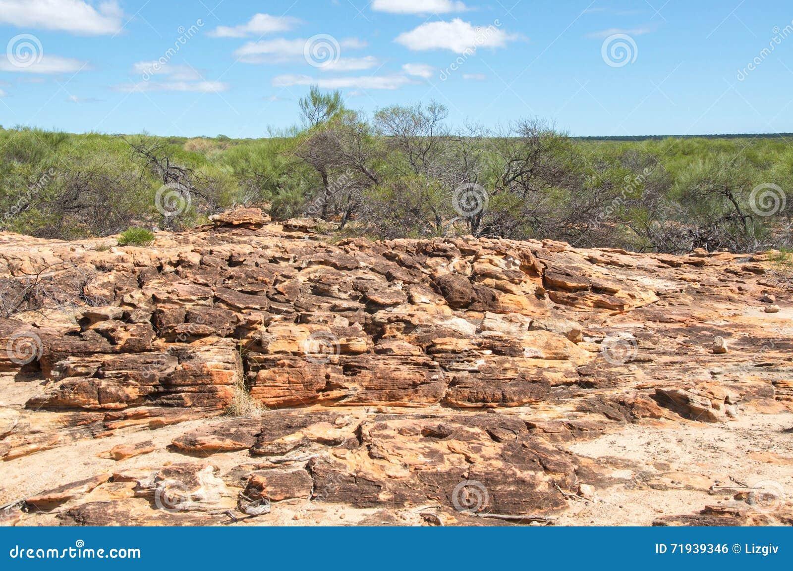 Скалистое Bushland