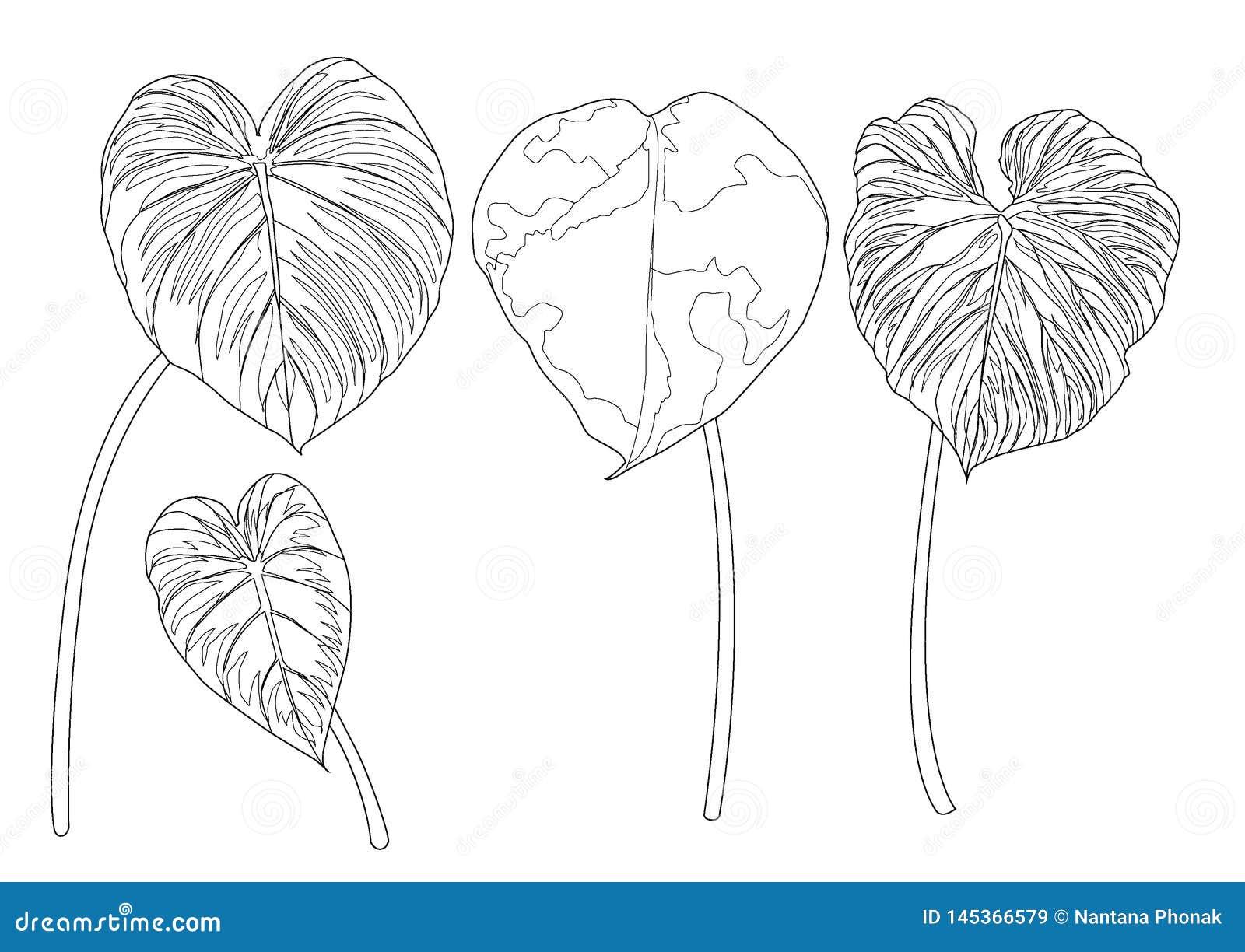 Скелетные листья выровняли дизайн на белой иллюстрации предпосылки